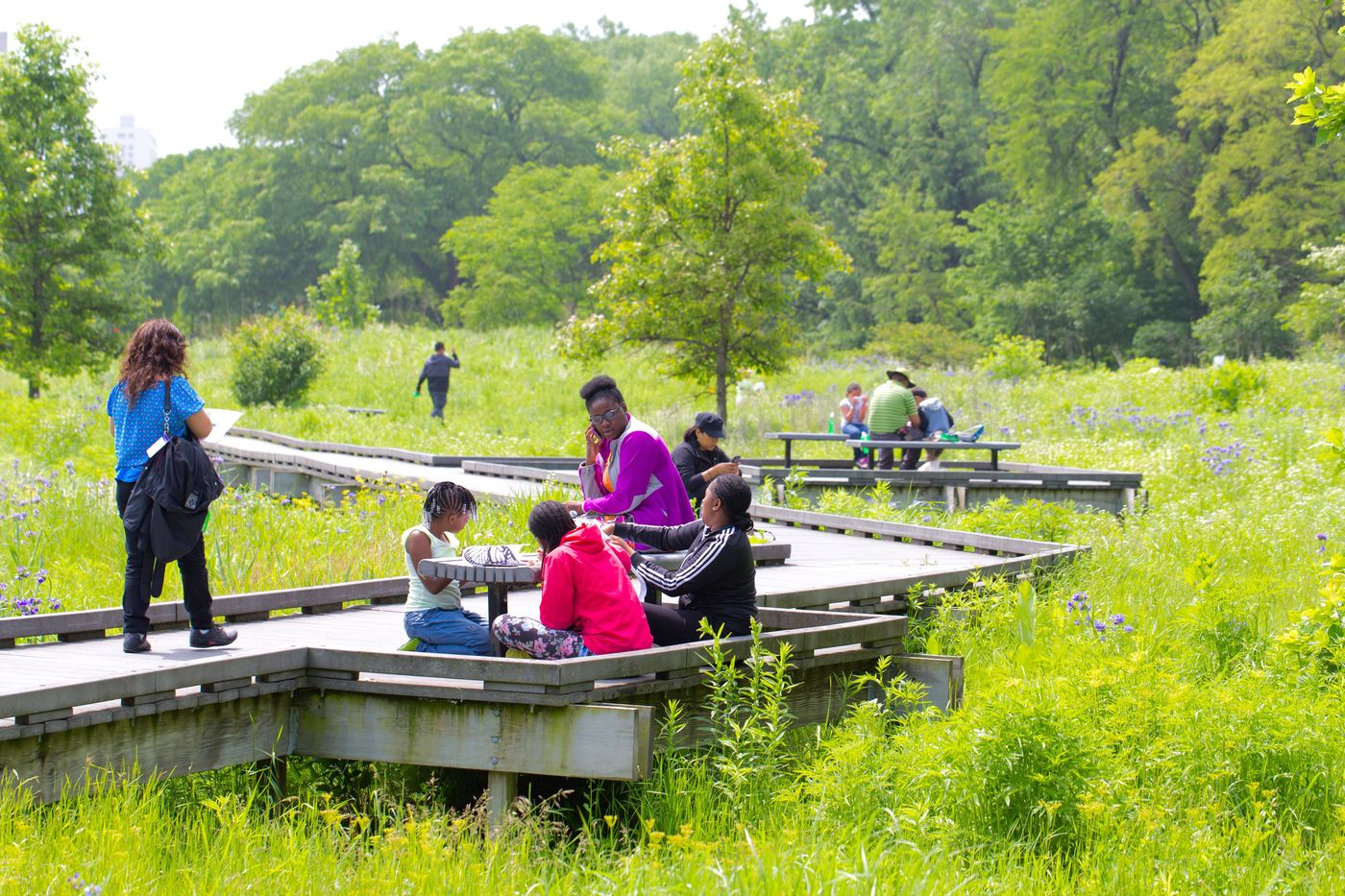 Roots & Routes, Burnham Wildlife Corridor, Habitat Restoration, Community Engagement