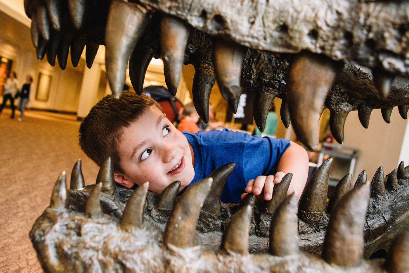 A child peers through the teeth of a replica T. rex skull.