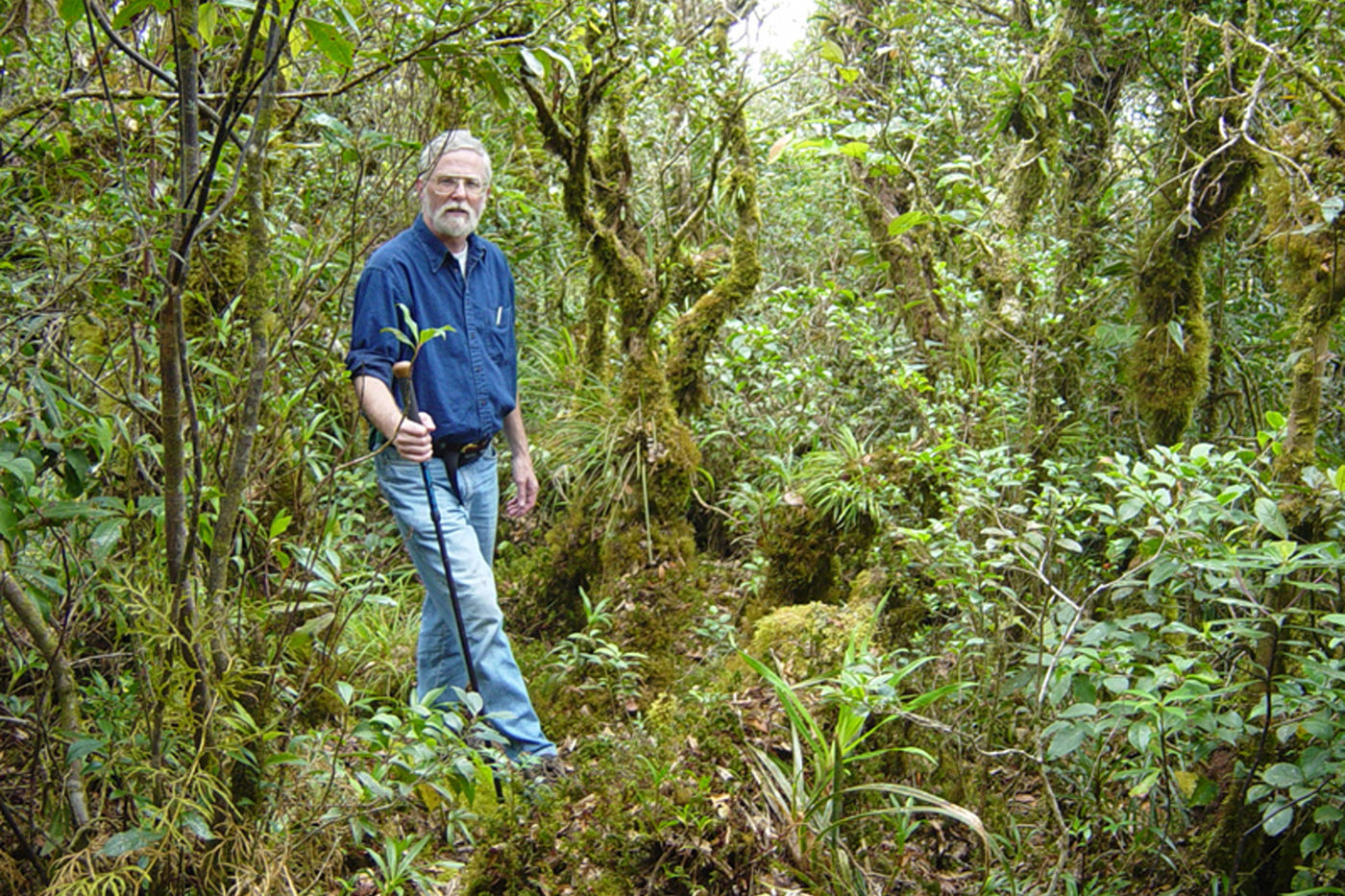 A man stands in the middle of a tropical forest, with bright green plants and mosses surrounding him. He holds a walking stick and poses for the camera.