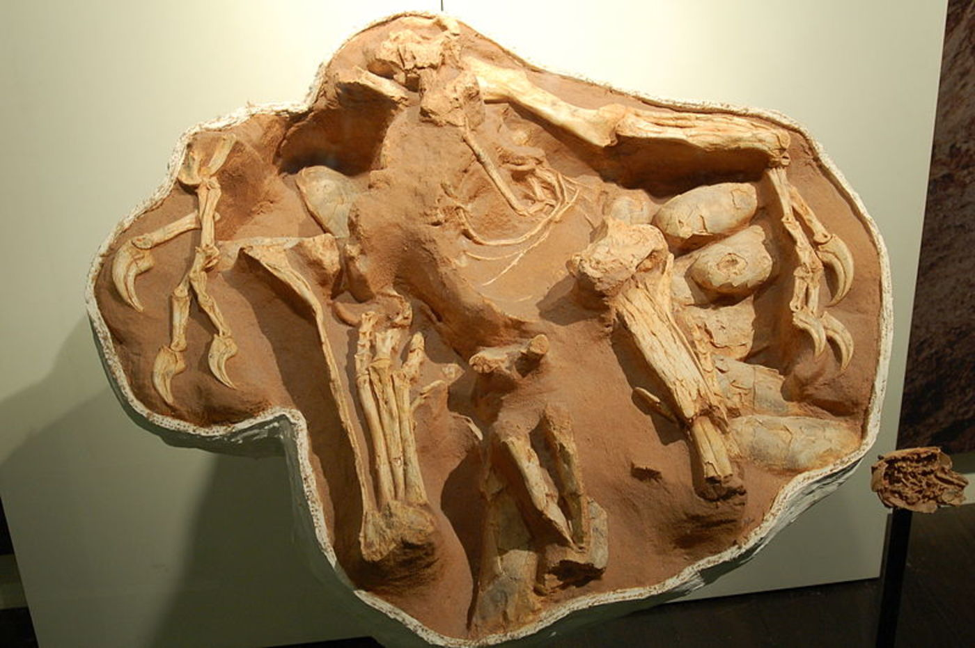 Fossil of bones in dirt, with claws and eggs visible