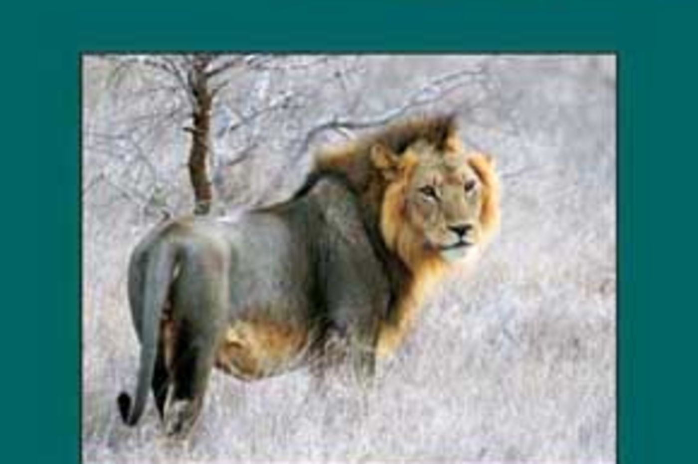 Cover of Journal of Mammology, Volume 87, Number 2, April 2016. Shows an image of a lion on the cover.