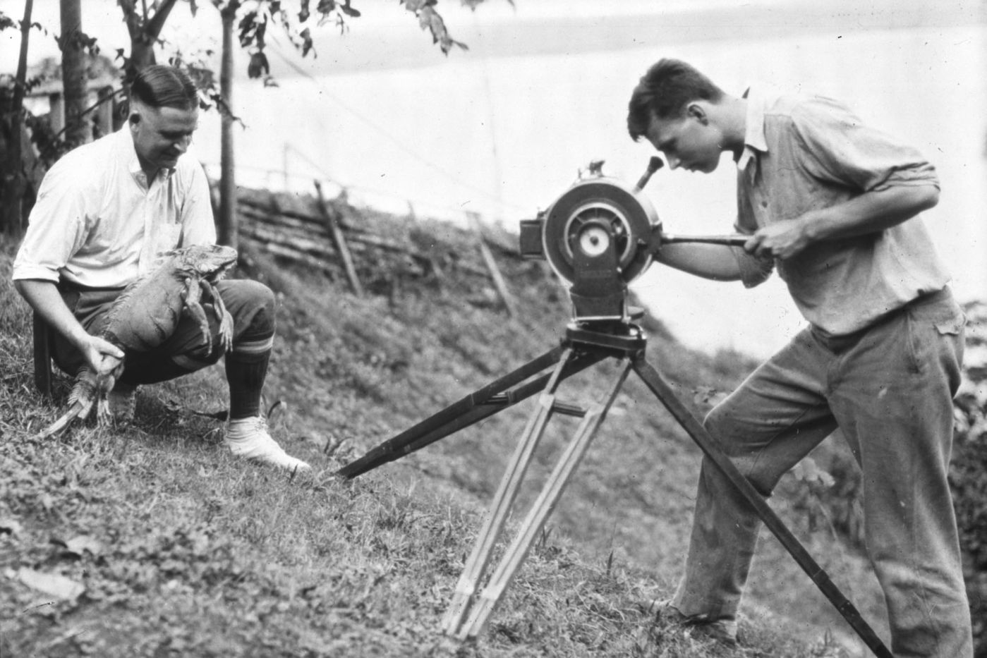 A man bends over the Akeley portable movie camera, looking into the eyepiece. He films another man who is kneeling on the grass and holding an iguana.