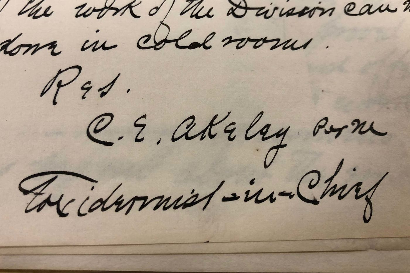"""Yellowed paper with Carl Akeley's signature in thick black ink. Below his name, he wrote """"Taxidermist-in-Chief."""""""
