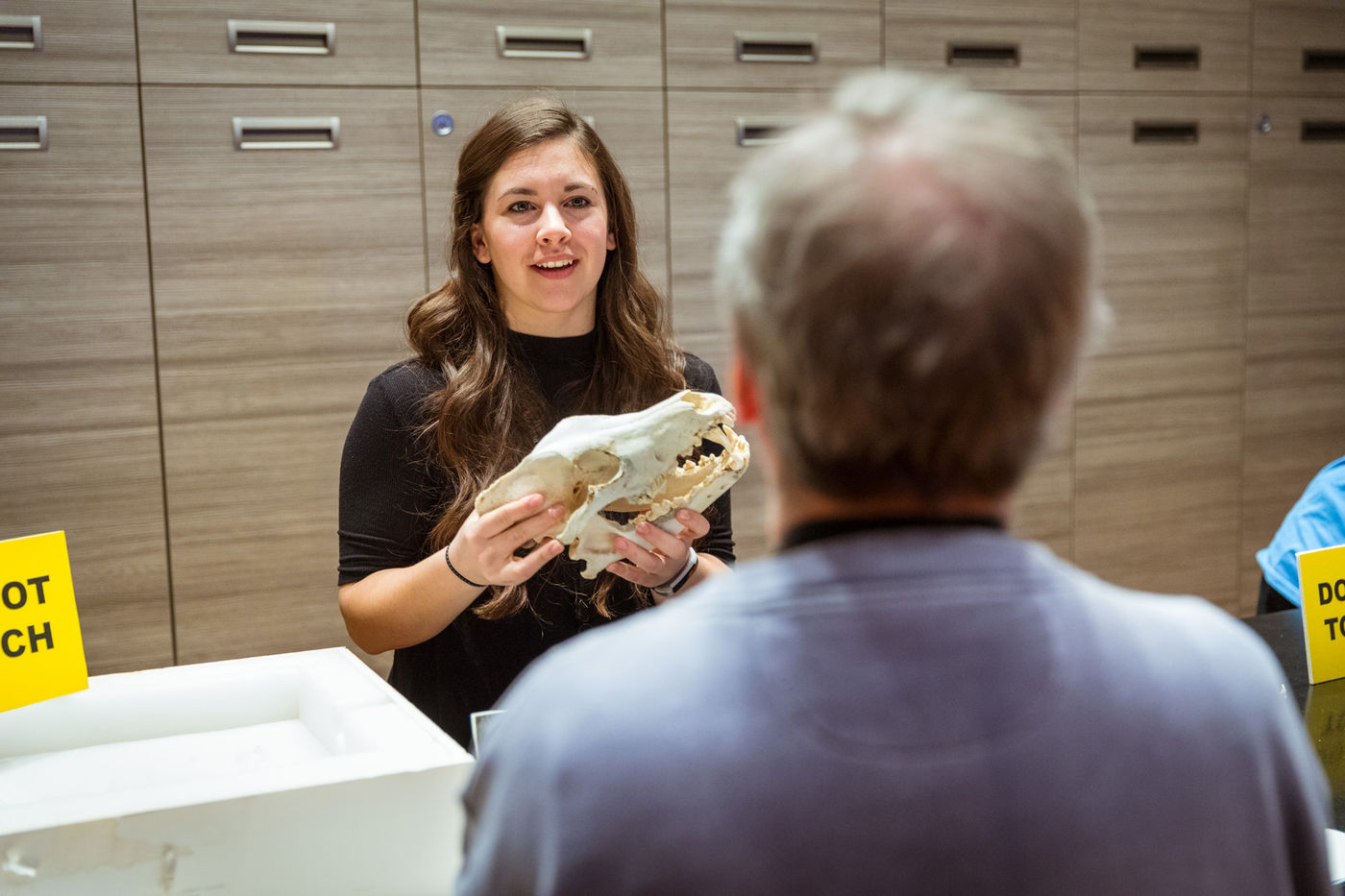 A volunteer shares a skull with a visitor to the Grainger Science Hub during a Meet a Scientist Event. The volunteer holds the skull up while speaking with the visitor who is standing directly in front of the volunteer with only the back of their head visible.