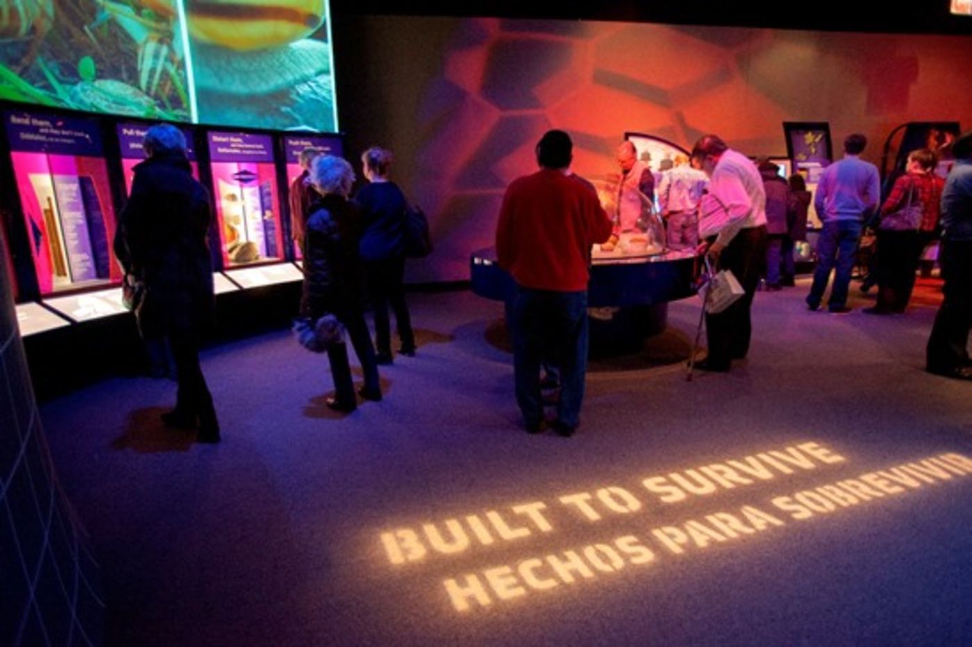 Visitors explore a temporary exhibition, The Machine Inside: Biomechanics.