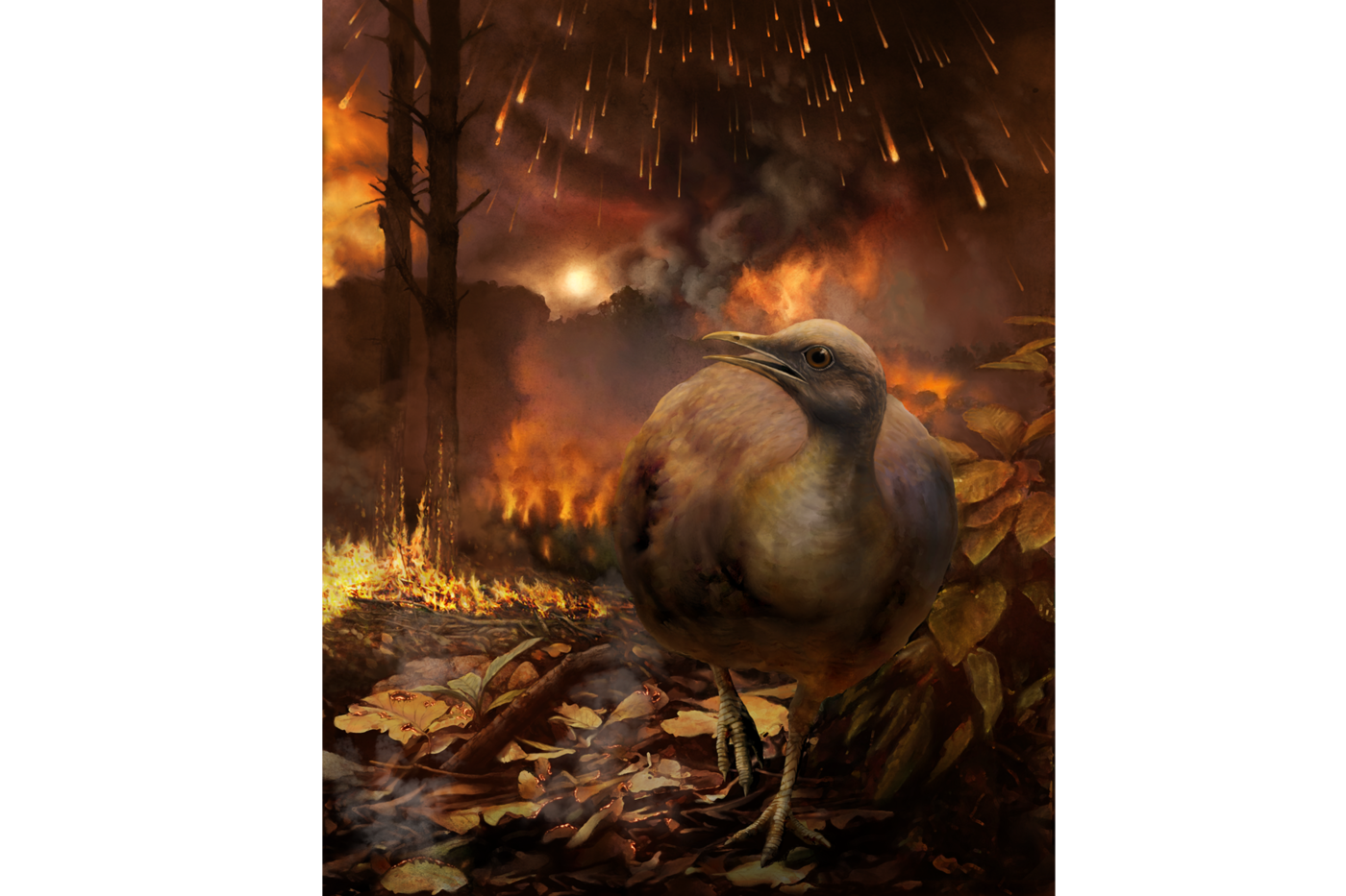 Illustration of prehistoric bird fleeing fire after an asteroid impact. Flames and smoke visible in background.