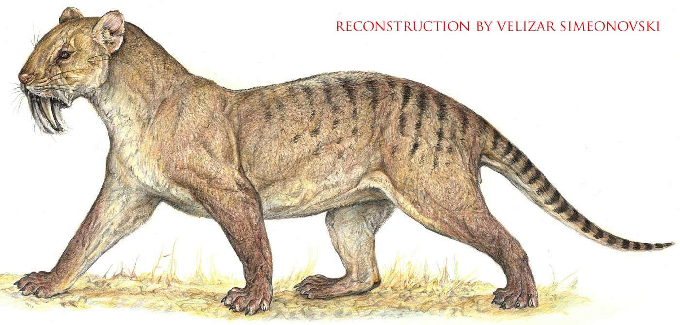 Drawing of an animal that looks like a large cat with small ears and long, sharp teeth