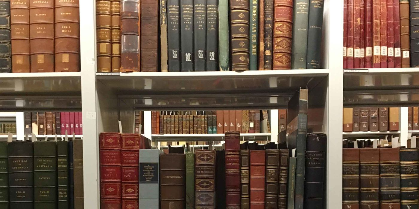 Shelves of large, ornate books in different colors (green, brown, red, blue), many with gold designs emblazoned on their spines