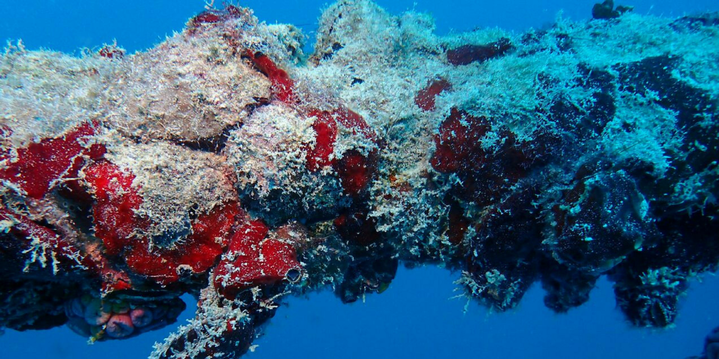 An undersea view of bright red and white coral-like structure