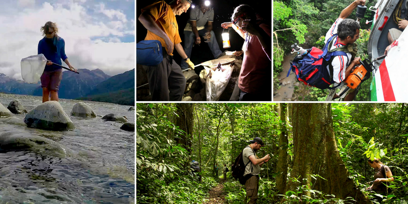 Collage of photos showing people out in in different environments: a woman using a net in a stream, two people inspecting trees in a forest, a man climbing out of a plane, and people holding lanterns