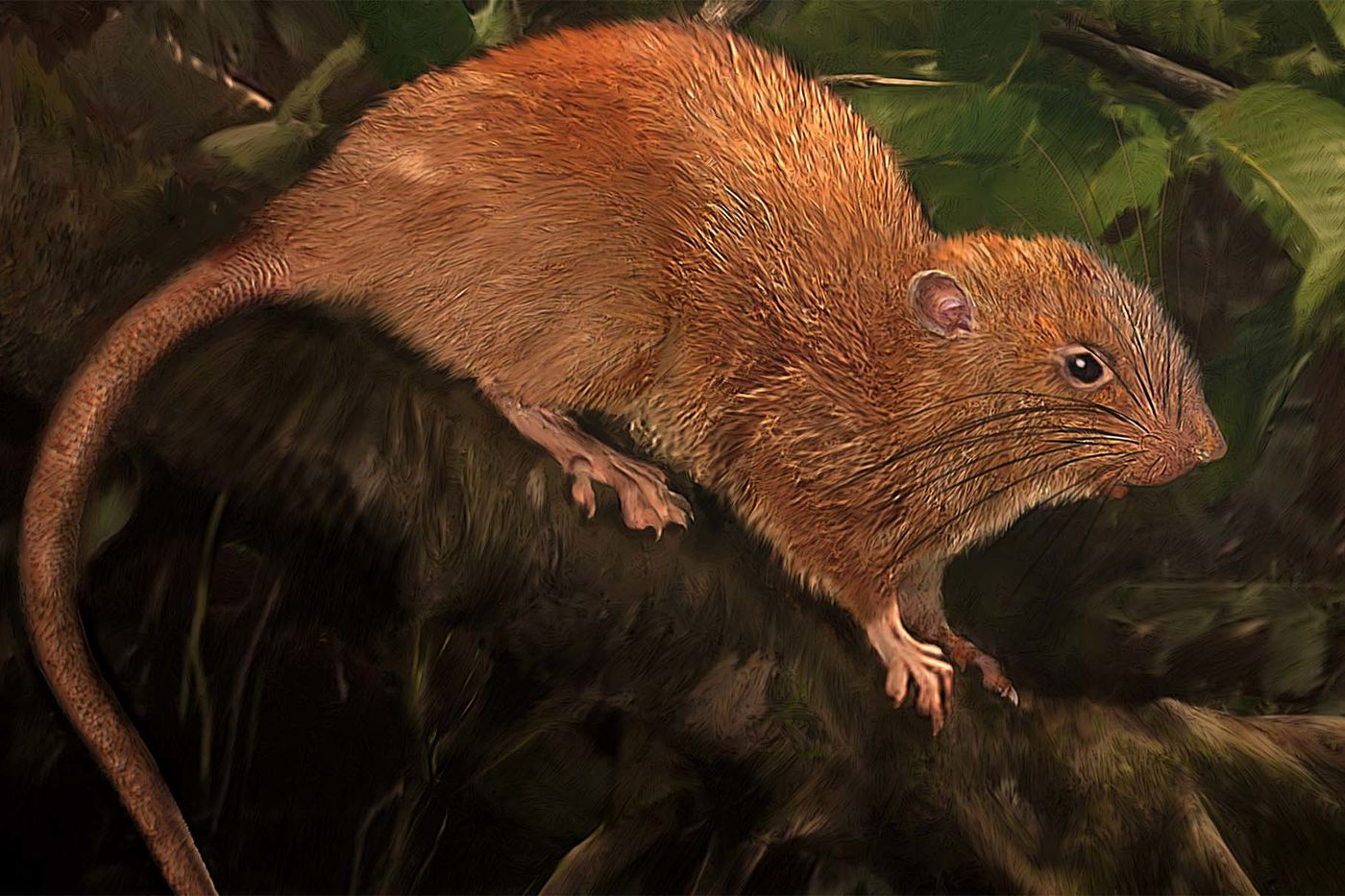 Lifelike illustration of a a large brown rat on a tree branch, surrounded by green foliage.
