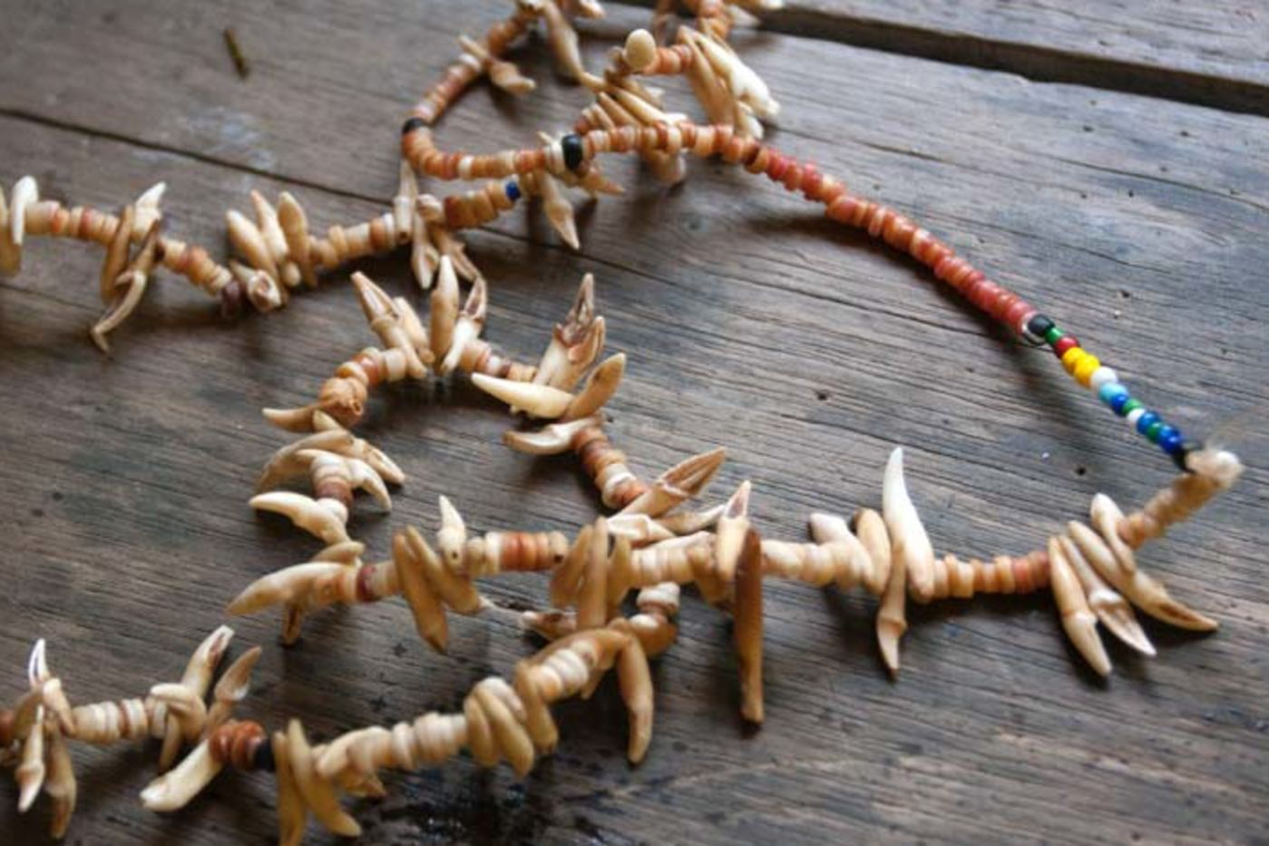 A necklace made of beads and pointy teeth, resting on a wooden surface