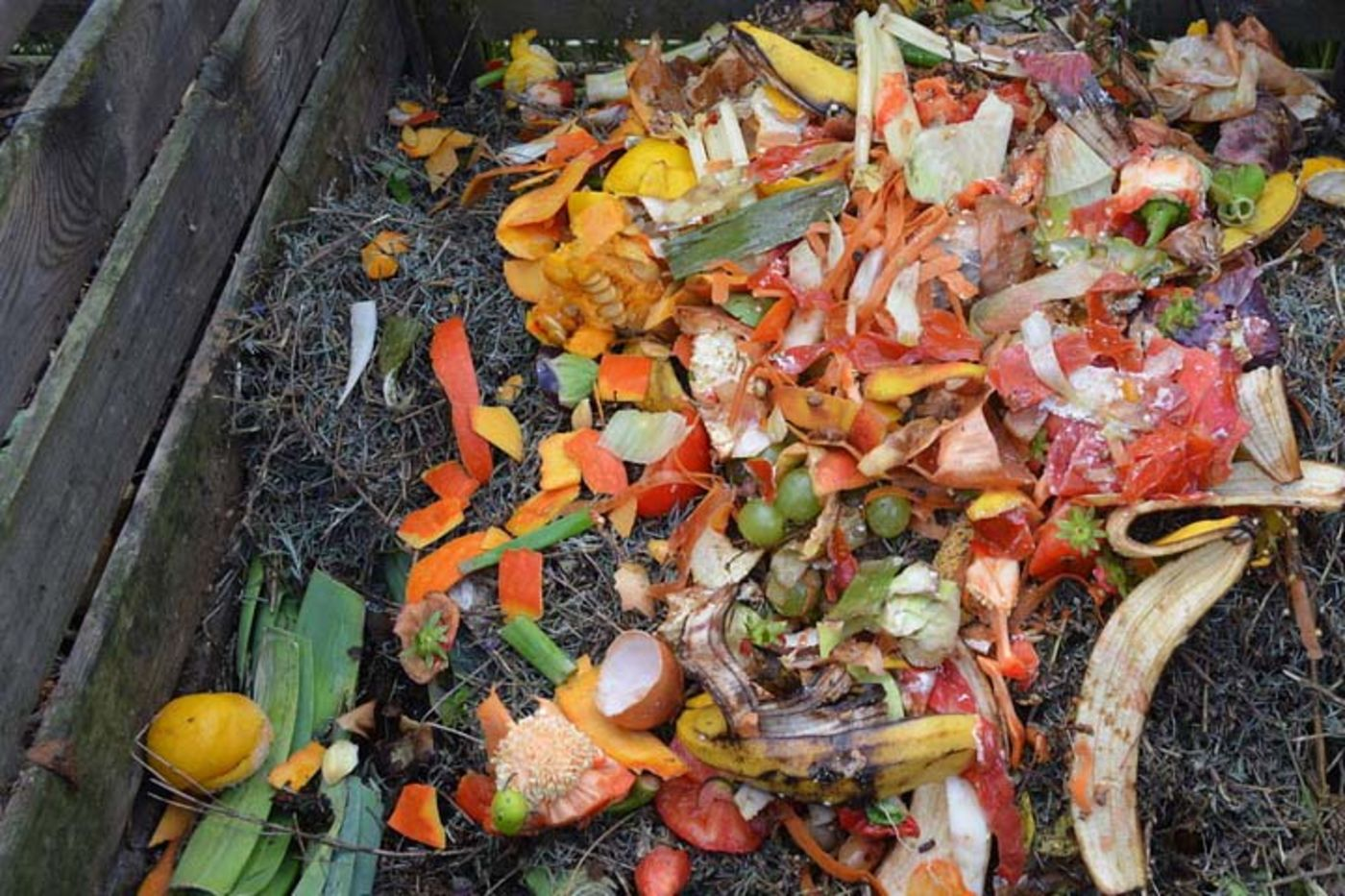 A variety of colorful fruits and vegetables in a wooden compost bin, along with pin needles and other natural materials