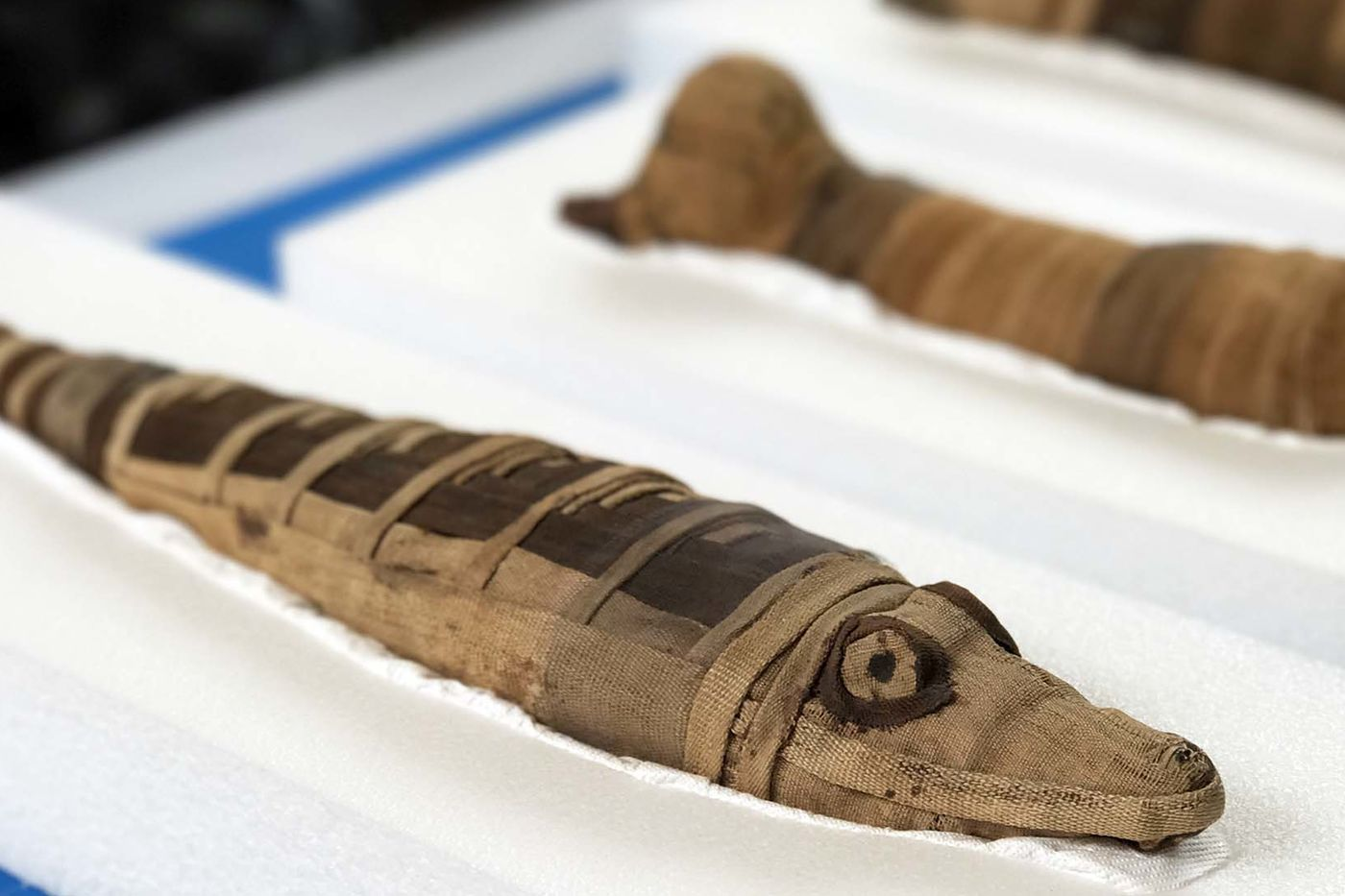 A small crocodile mummy wrapped in brown cloth with the eyes drawn on, and other similar bundles in the background