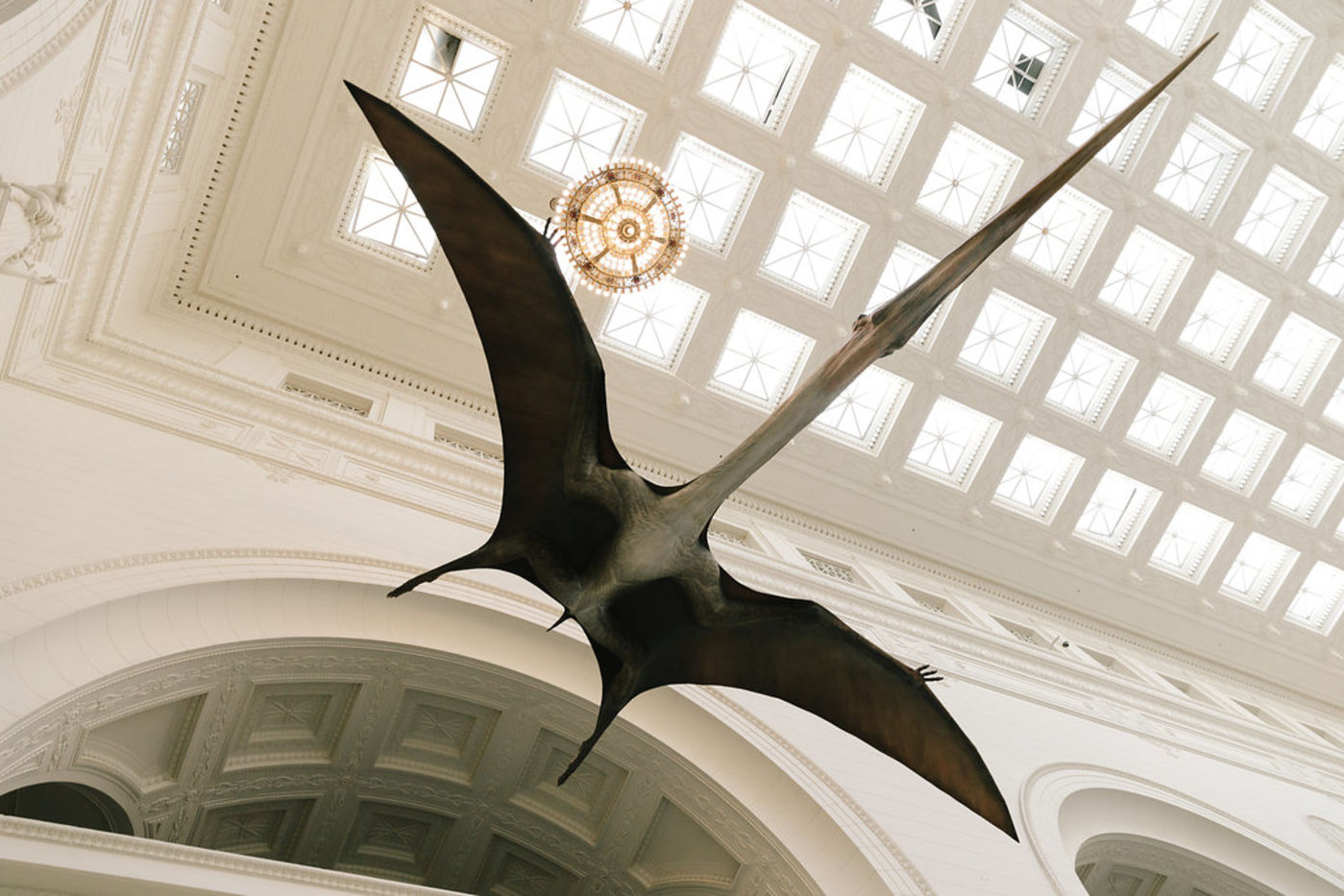 Looking up at the underside of a pterosaur model suspended from the ceiling in the museum's main hall. Skylights and a round light fixture, along with neoclassical architectural details, are visible.
