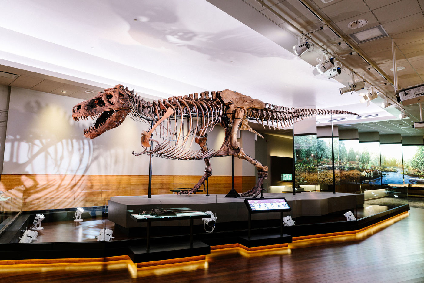 SUE the T. rex dinosaur skeleton on display in a museum gallery. Screens behind the dinosaur show a forest scene.