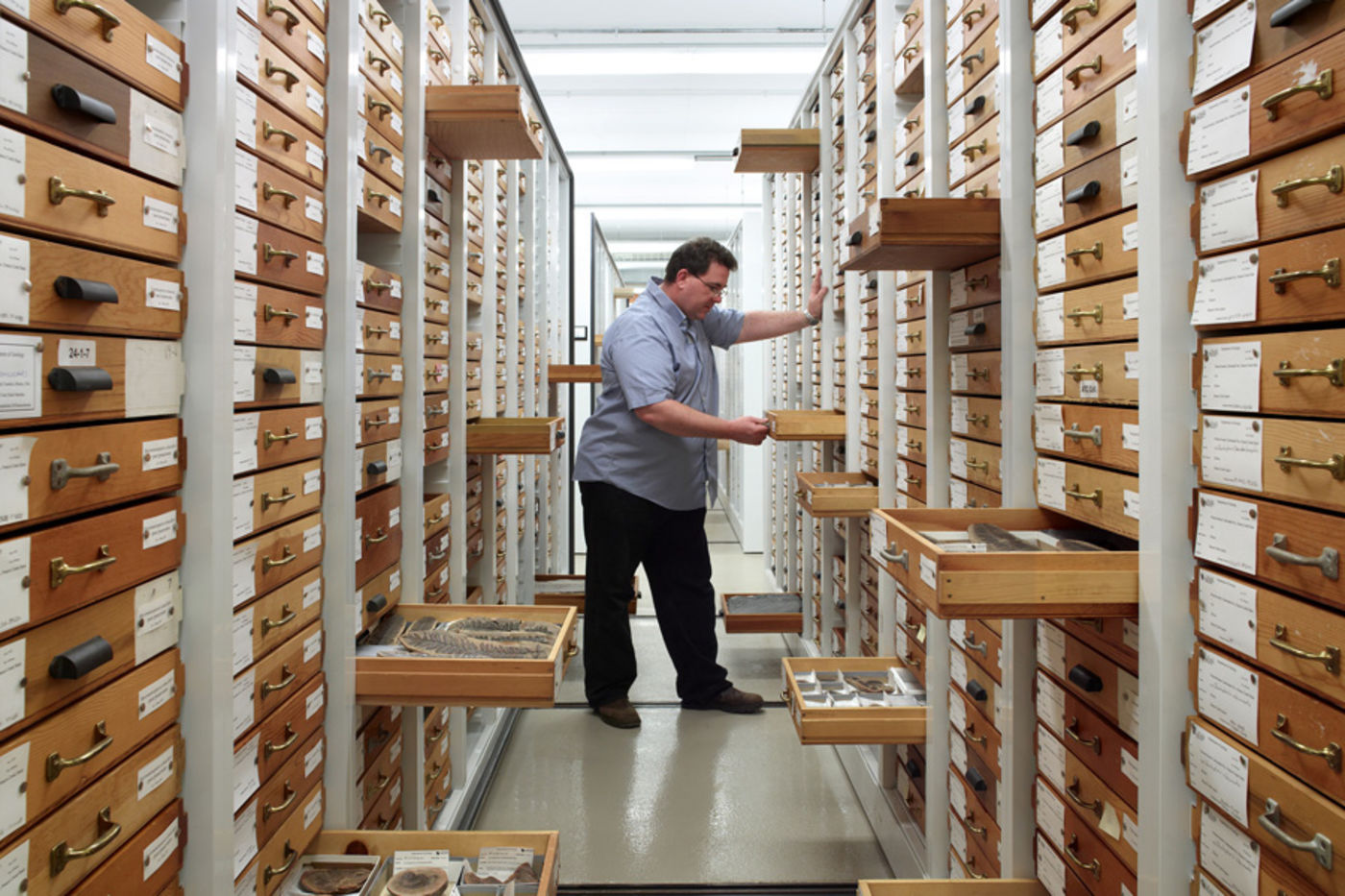 In a storage area for geology collections, a staff member pulls open a drawer to view an item. Other drawers are open around him with geology specimens visible.