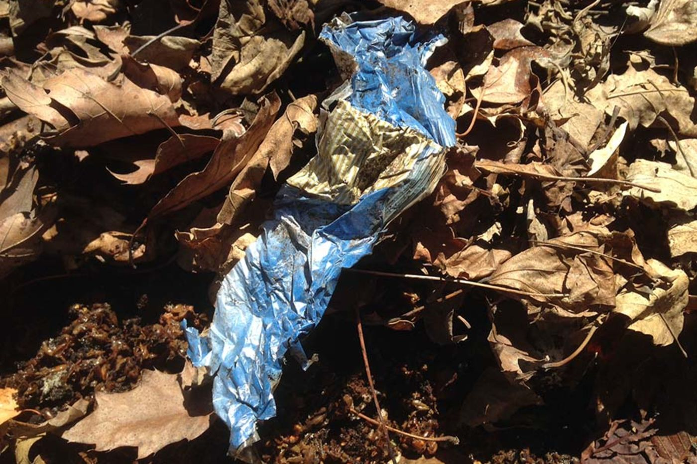 A crinkly blue wrapper surrounded by brown leaves and dirt