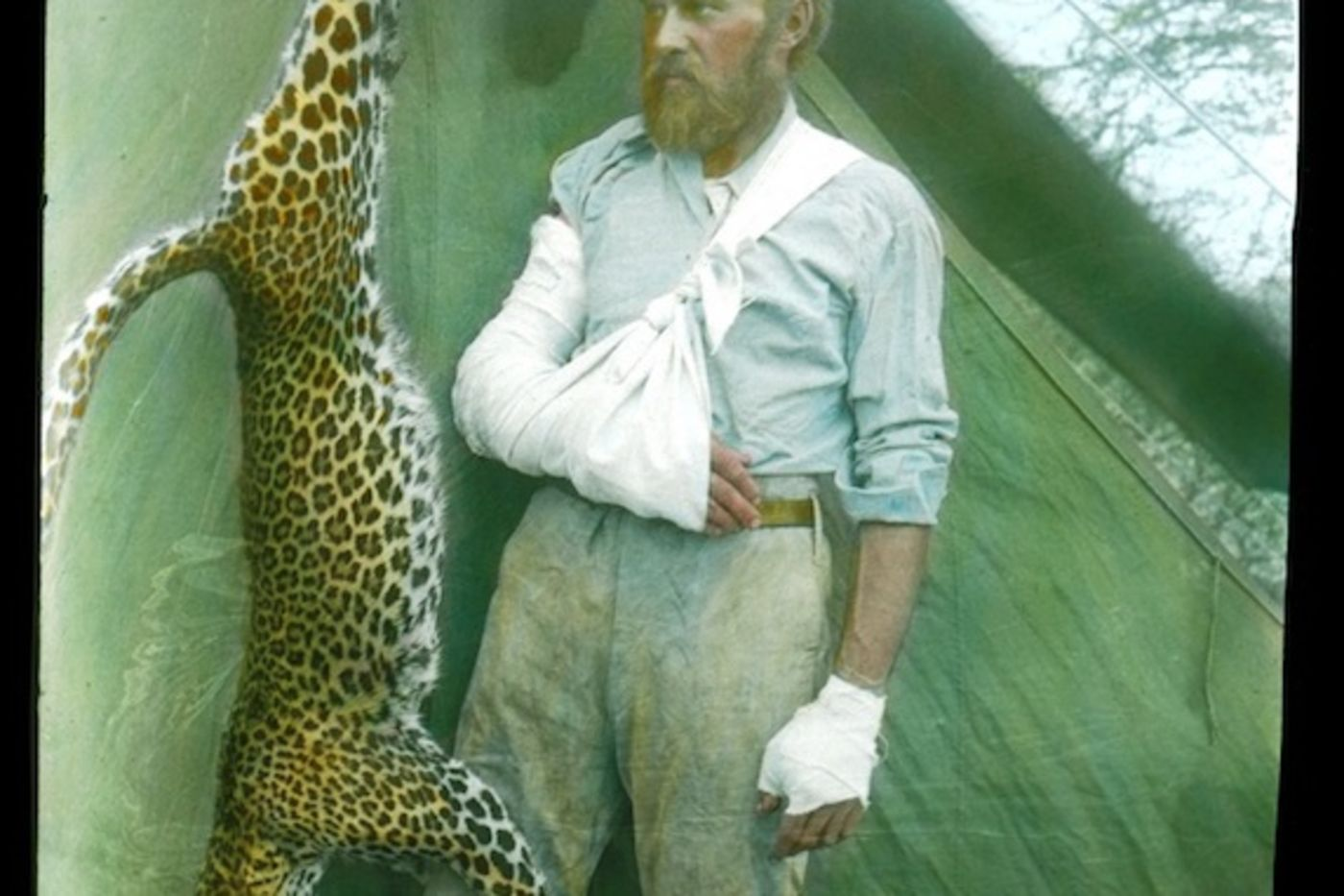 A colorized photo of a man with disheveled hair and arm in a sling, looking at a dead leopard hanging upside down.