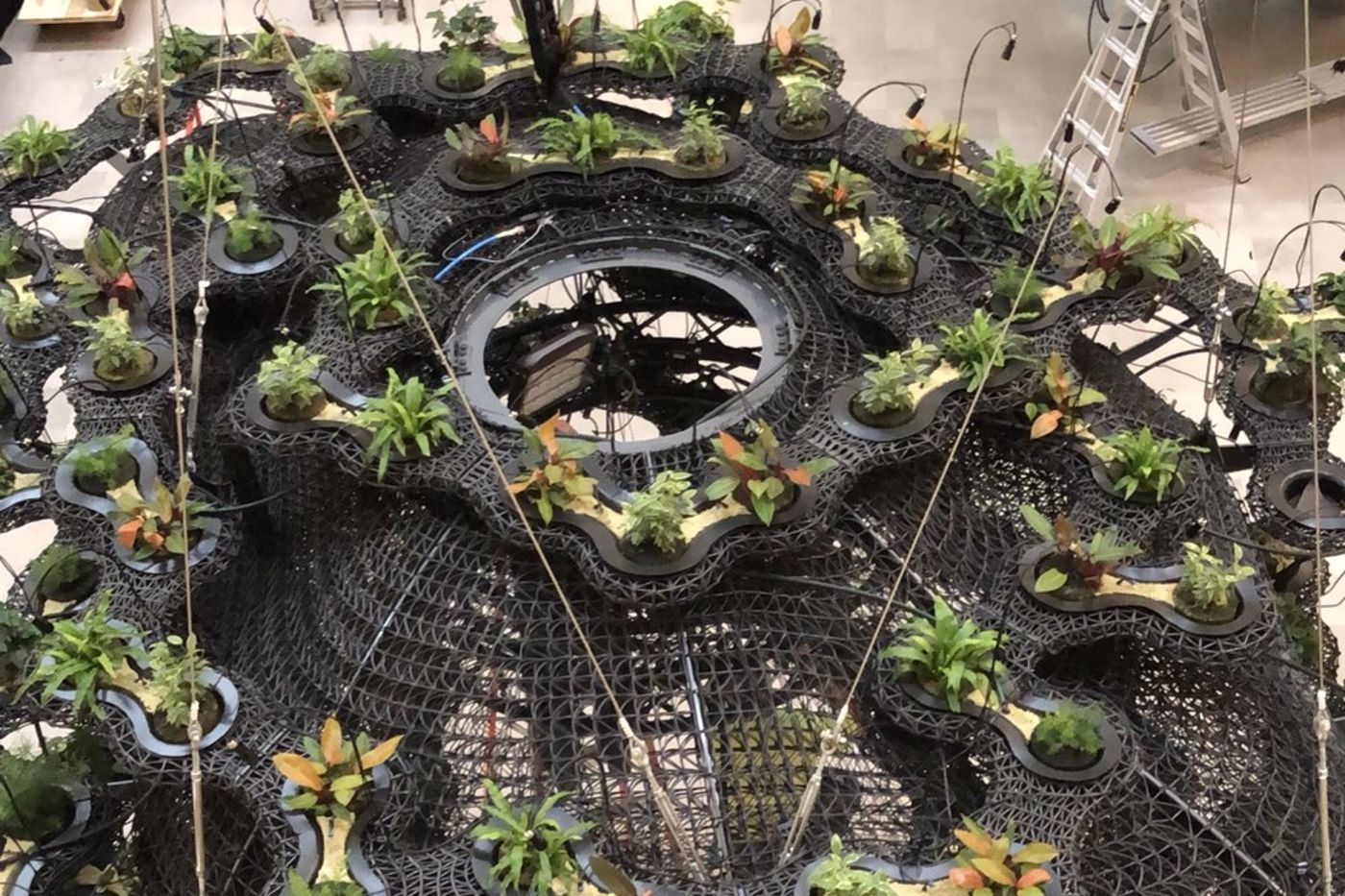 Looking from above on an abstract black plastic structure holding numerous plants and suspended from wires.