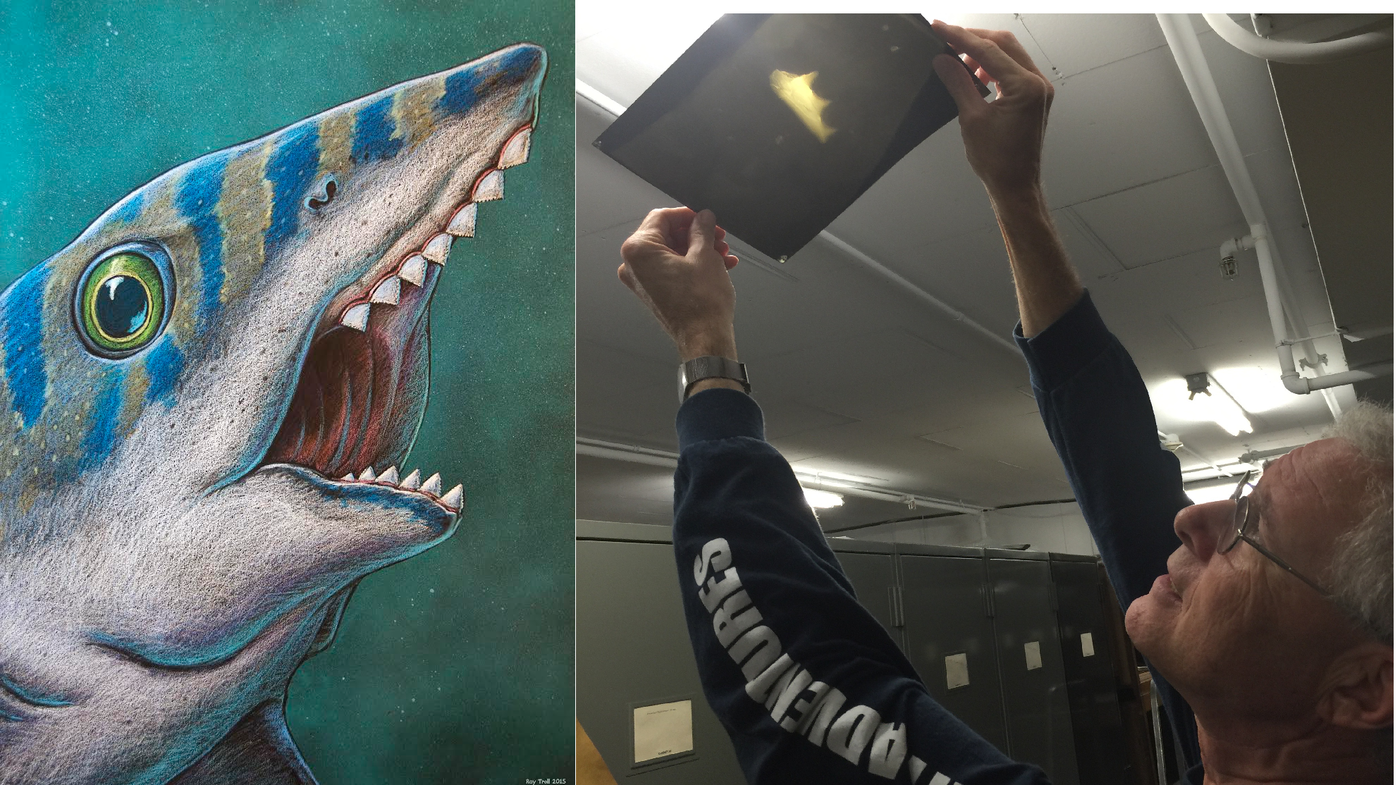 Illustration of a striped shark with many pointy teeth, next to a photo of a man holding an X-ray up to the light