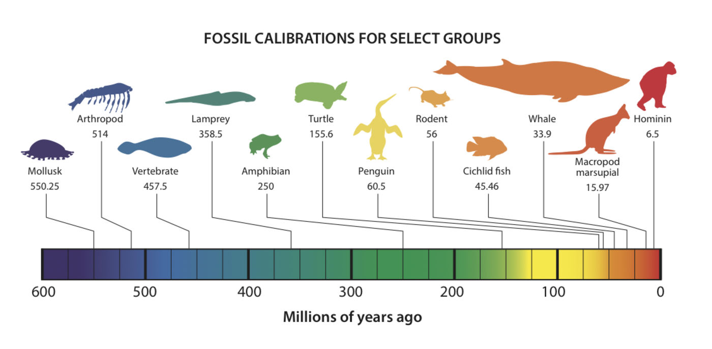 Fossil calibrations for select groups
