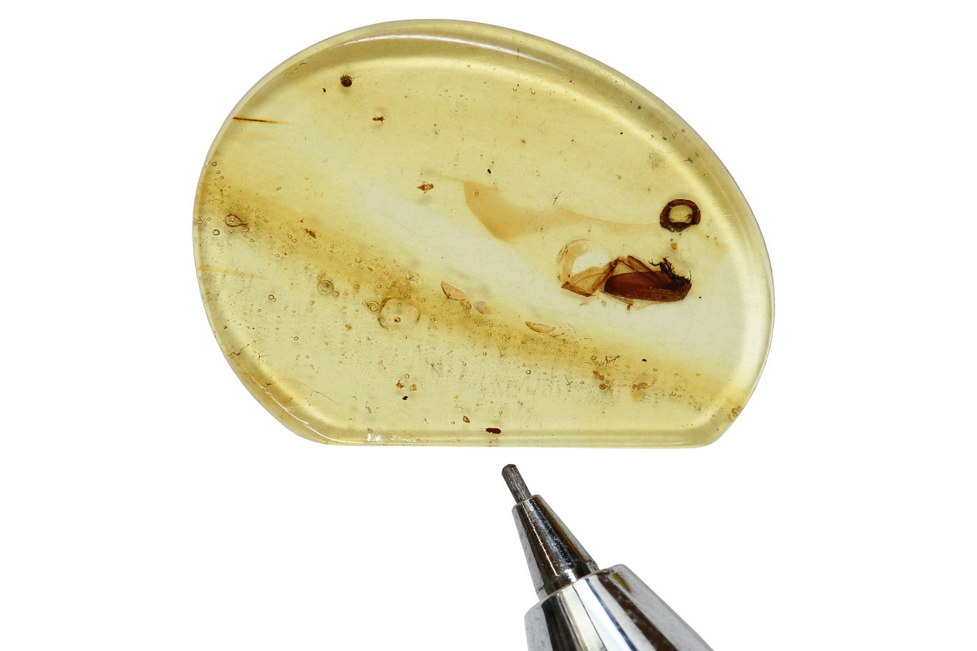 A light yellow piece of amber, mostly oblong with one straight edge, is positioned next to the tip of a mechanical pencil to show the small scale of a beetle that looks like a tiny brown dot. There are streaks and other occlusions in the amber, including a larger brown insect that looks like a cockroach.
