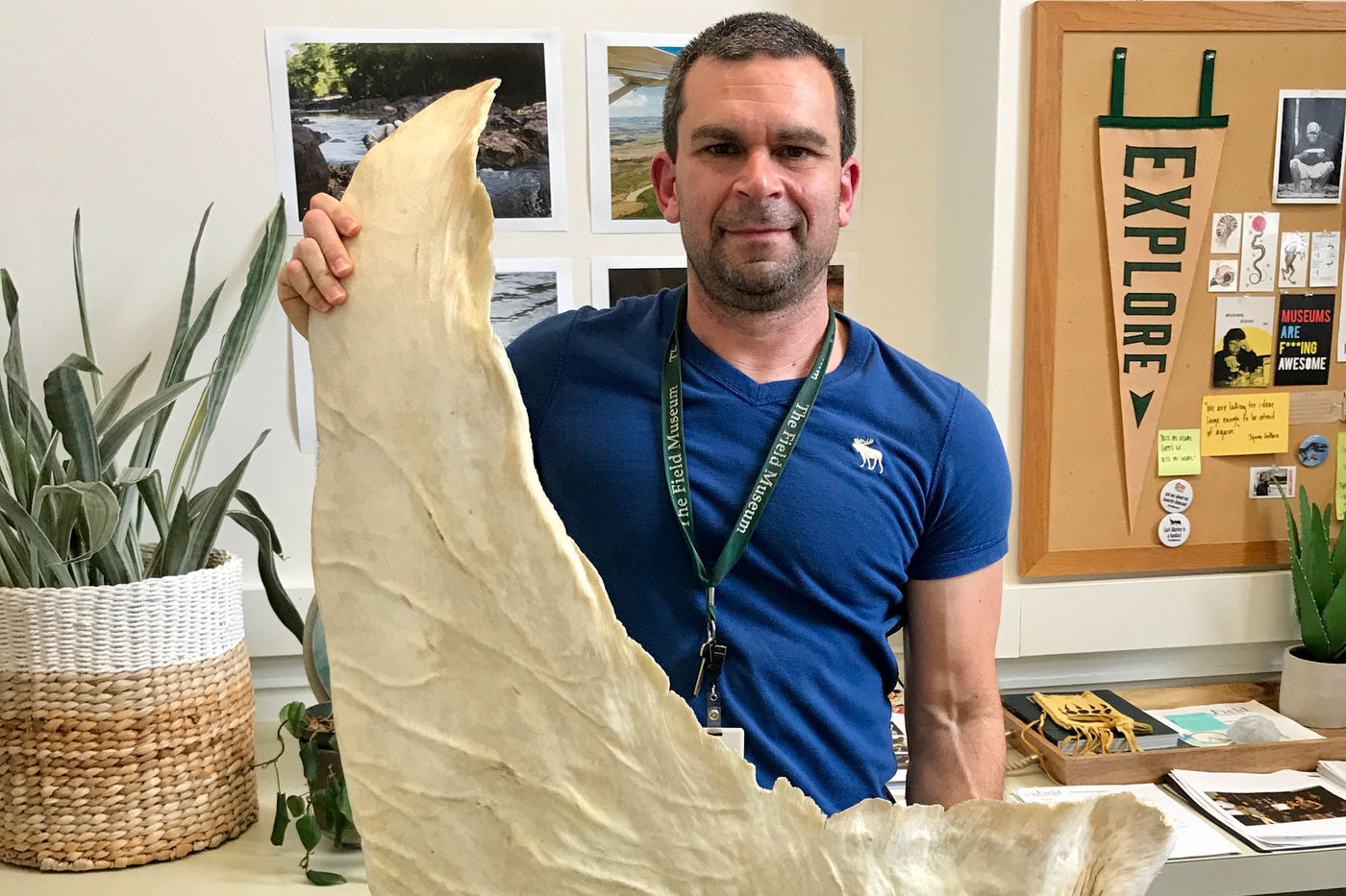 A man holds a large white, dried shark fin, which appears about two feel tall. The background is of an office that has a few plants and natural history-themed images on the walls.