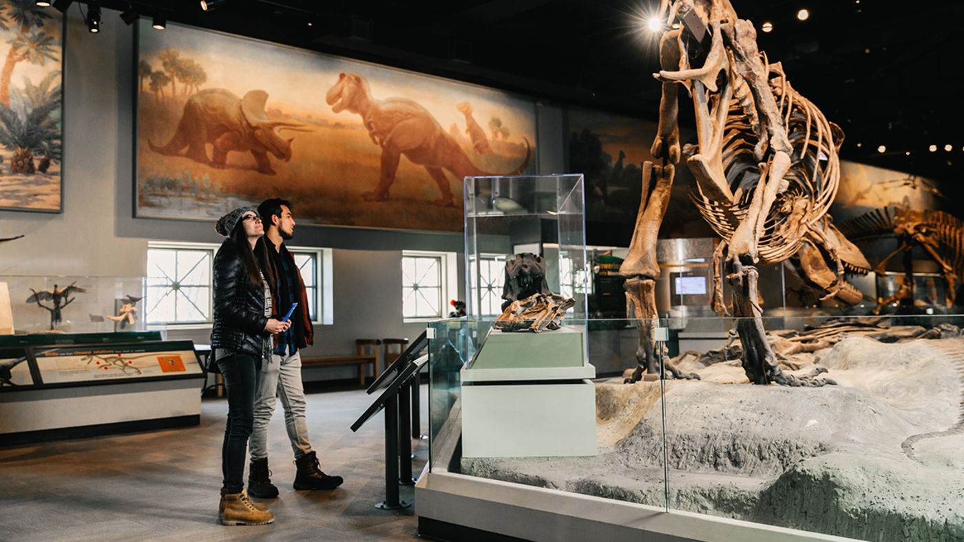 Two people stand, looking at a Daspletosaurus skeleton in the Genius Hall of Dinosaurs. Behind them is Face Off, a mural of a Tyrannosaurus Rex and a Triceratops completed by Charles R. Knight in 1927.