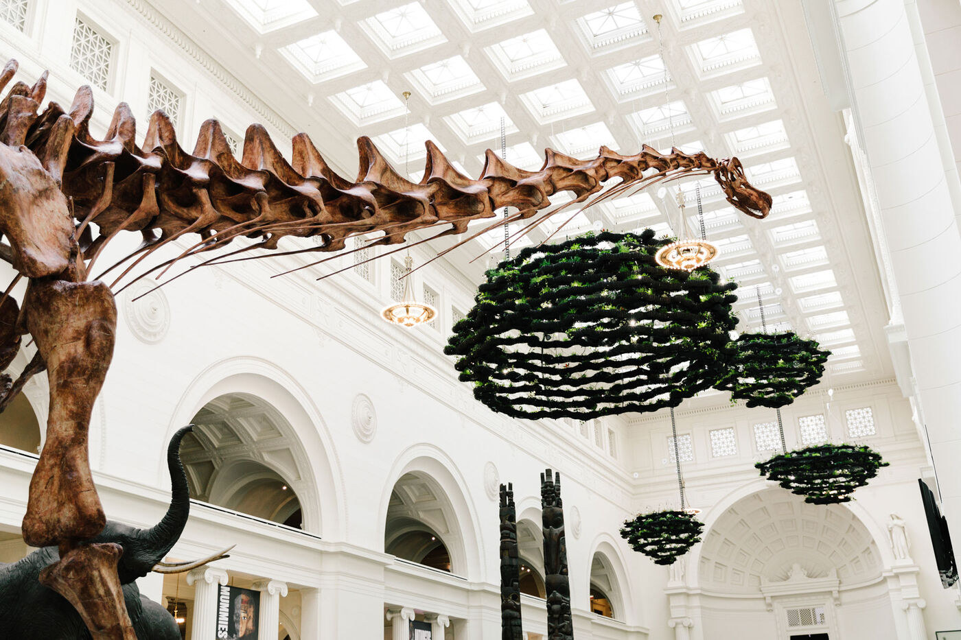 Máximo the Titanosaur and hanging gardens in the Field Museum's main Stanley Field Hall.