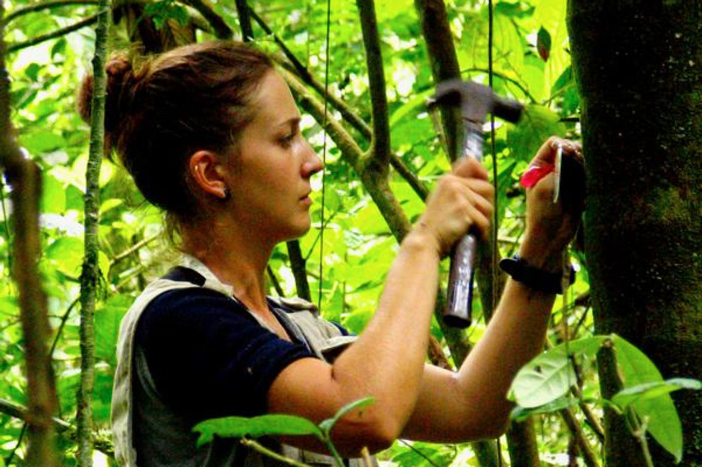 A woman in a jungle hammering something onto a tree.