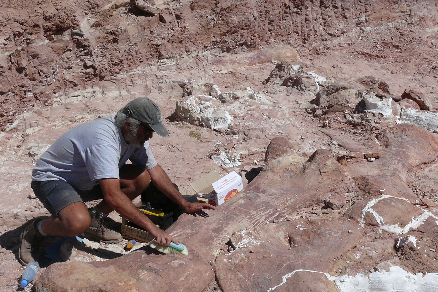 A scientist excavates a titanosaur fossil in Argentina. He crouches over a fossilized bone and uses a brush to remove dirt before it's wrapped in a plaster field jacket.