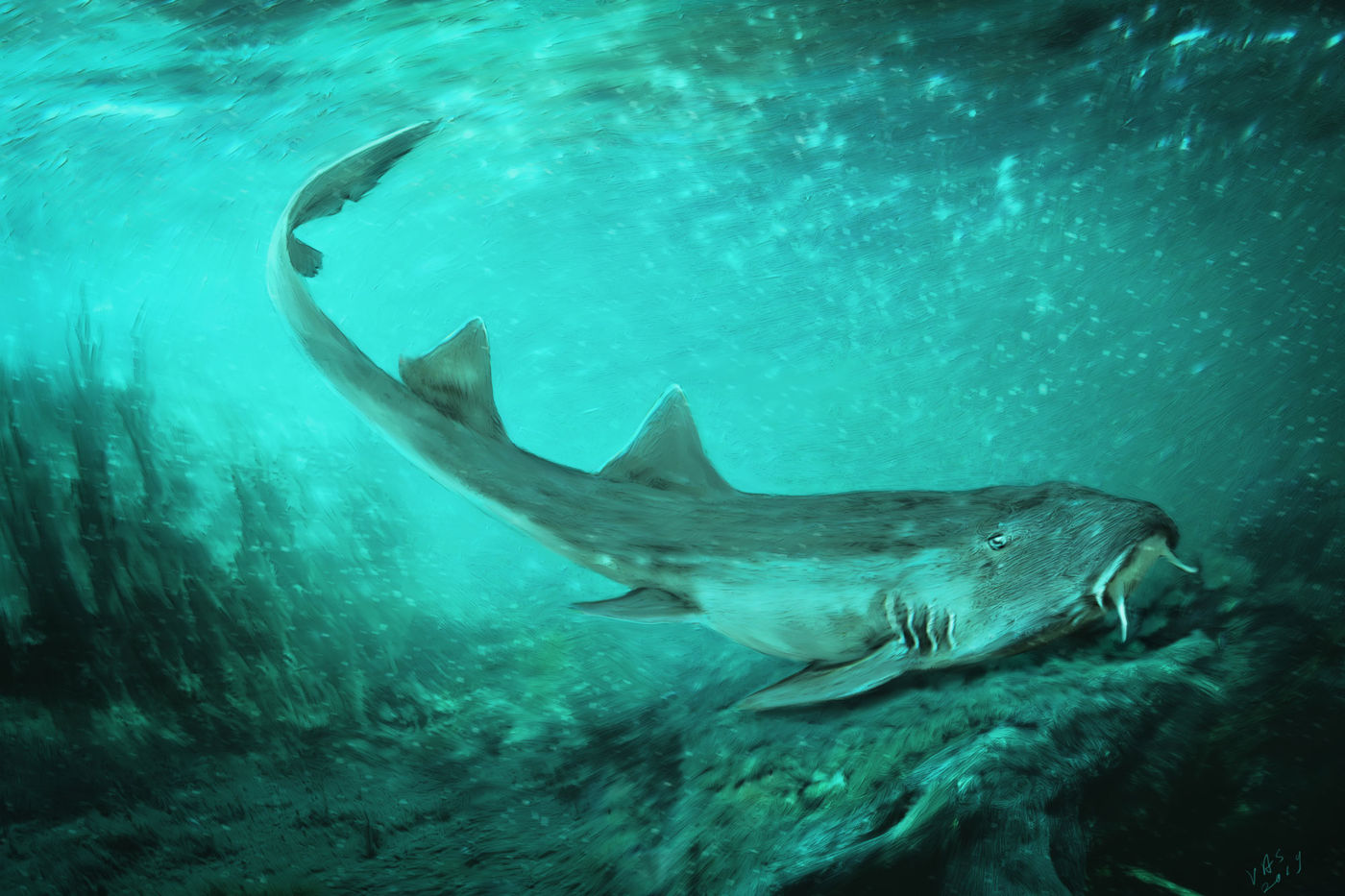 Illustration of a small shark on the sea floor, with a greenish tint to the water.