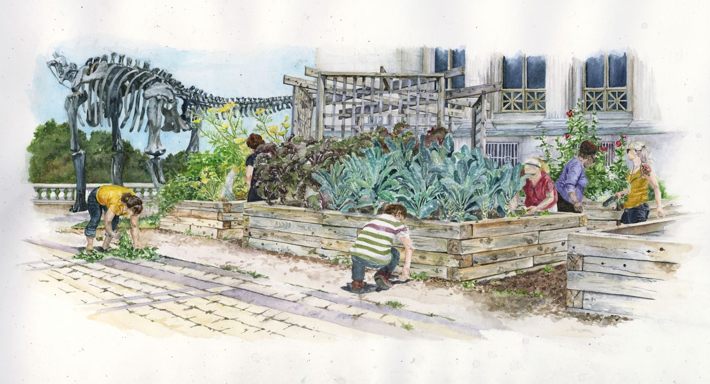 Illustration showing a group of volunteers helping to weed the Edible Treasures Garden on The Field Museum's terrace.