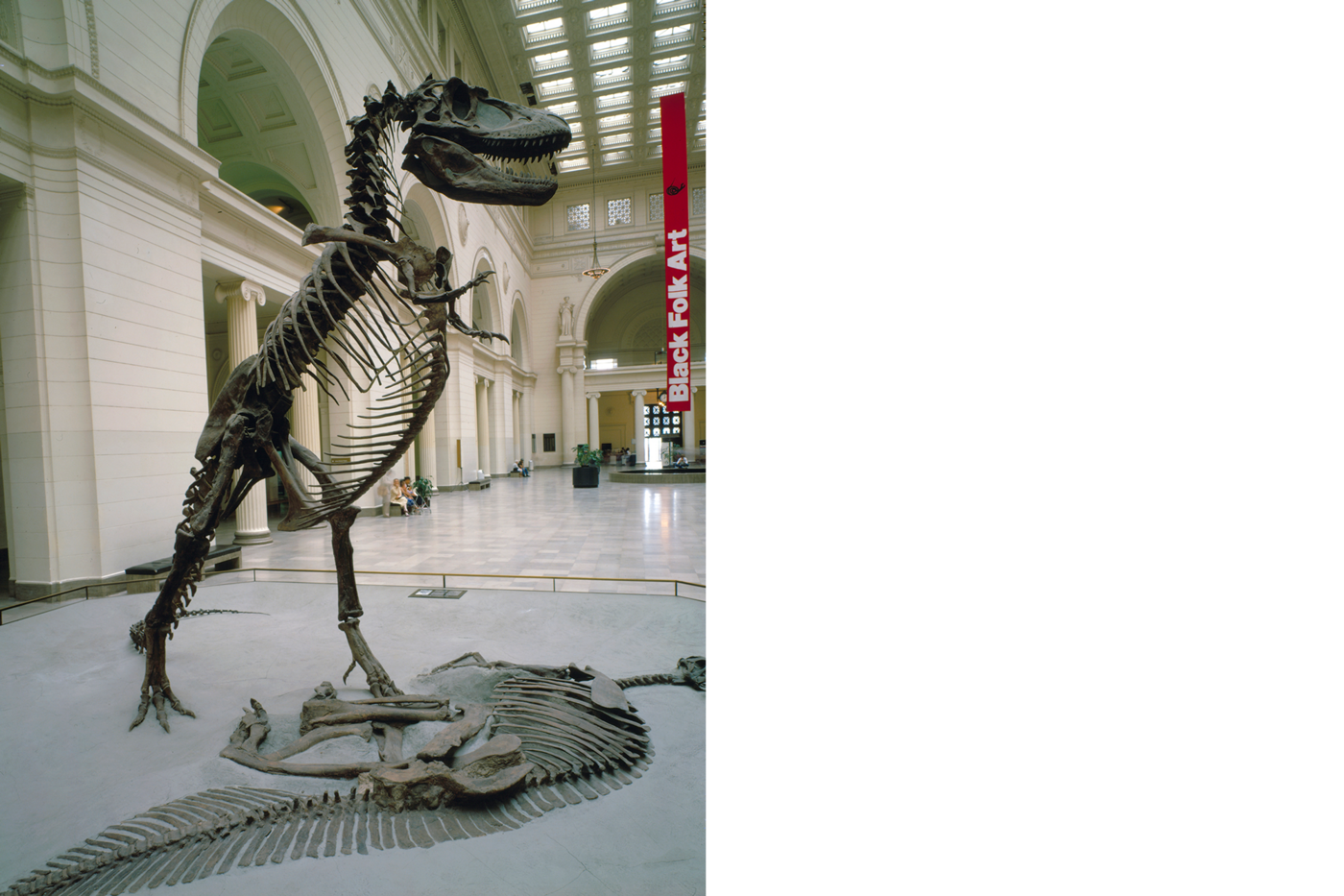George, a Daspletosaurus dinosaur skeleton, stands upright in Stanley Field Hall. Another dinosaur skeleton is embedded in the base in front of the Daspletosaurus.