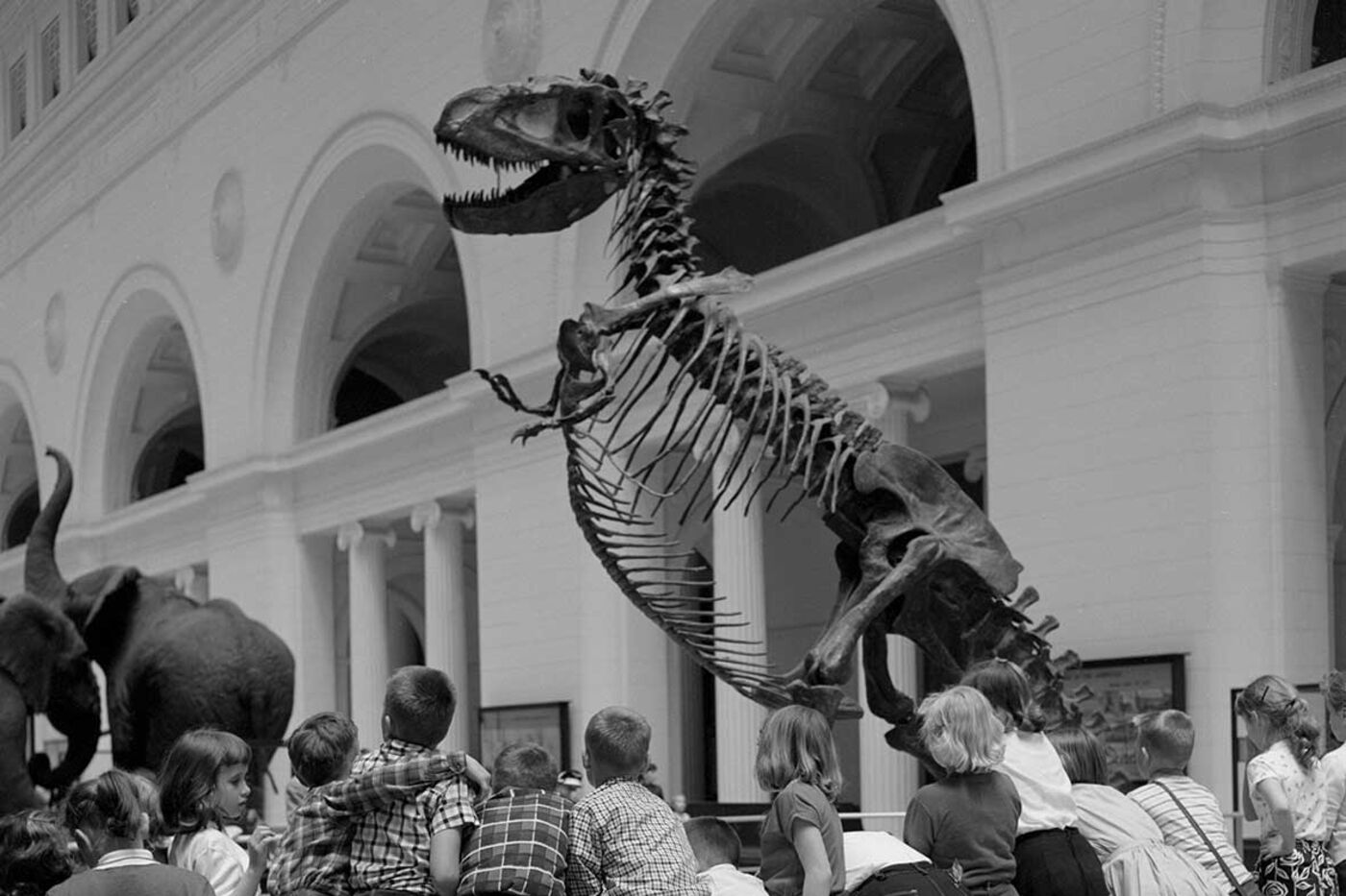 Children gather around the base of a Daspletosaurus dinosaur skeleton. Taxidermied elephants and Stanley Field Hall's classical architecture are in the background.