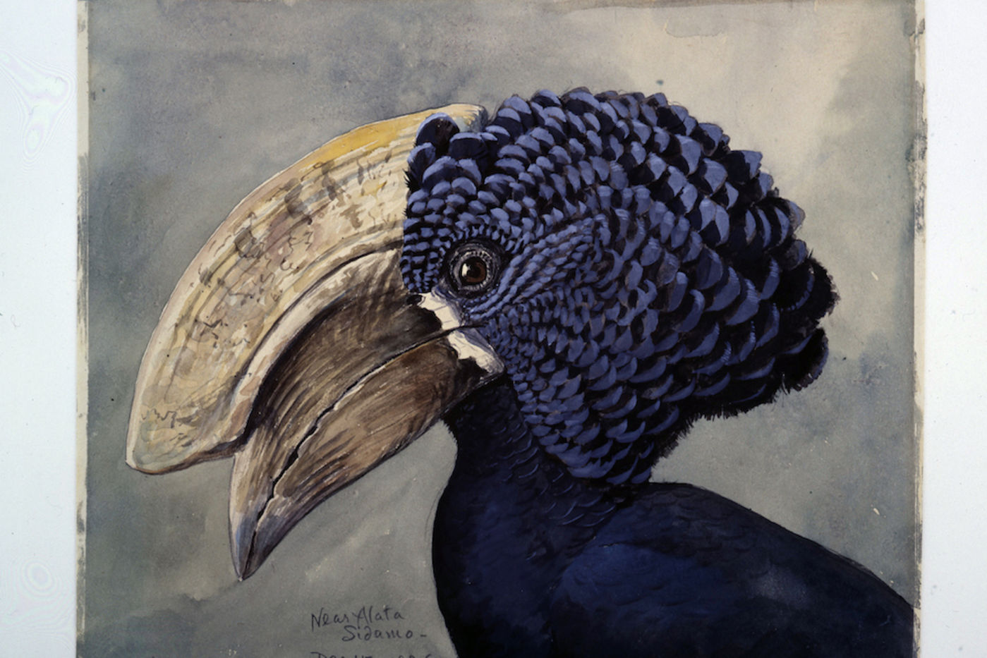 Painting of a bird's head in profile. Bird is blue with a large beak and protrusion above the beak.