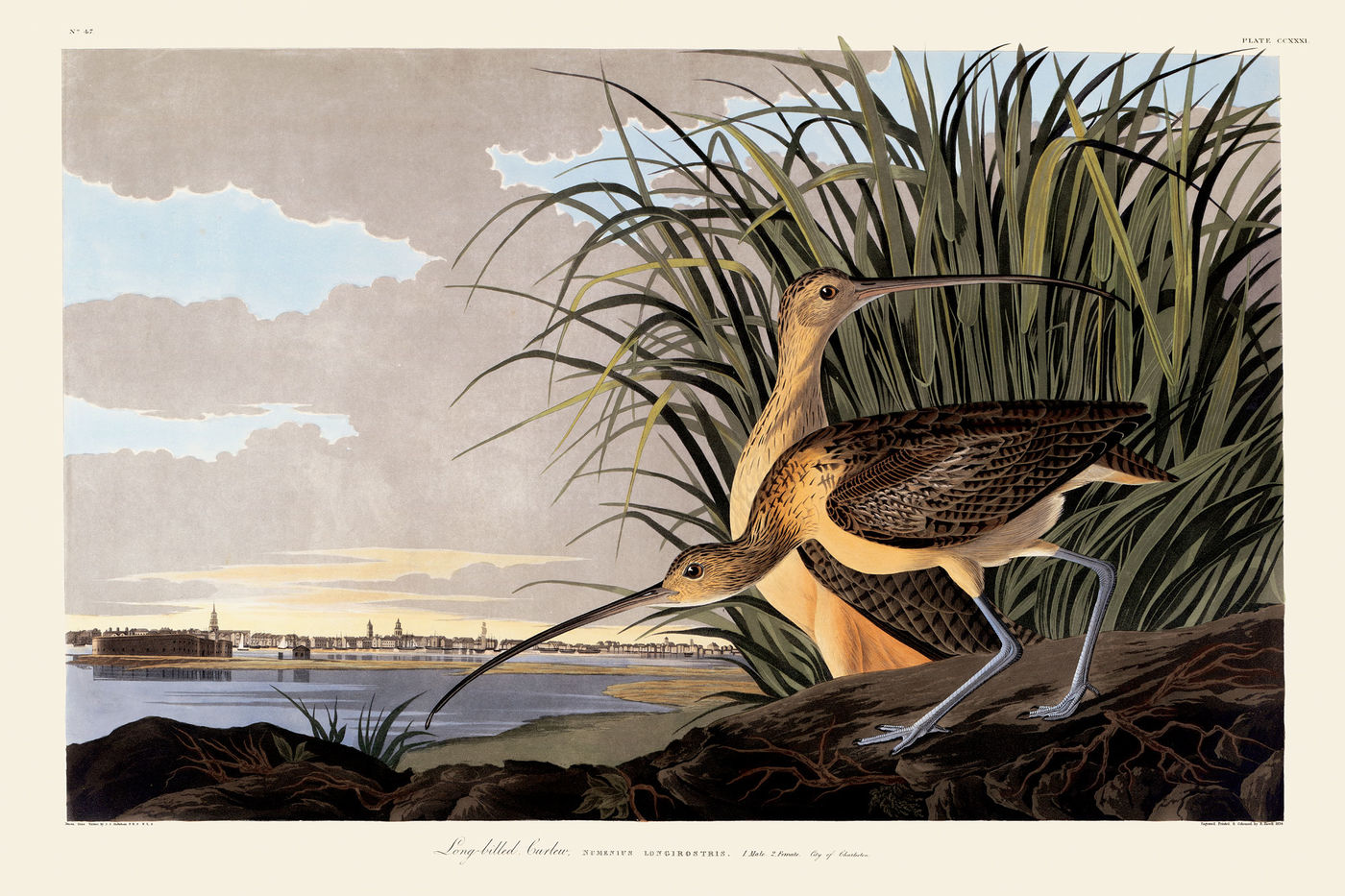 Two birds with very long, thin beaks poke around at the edge of the water. They're a light yellow-tan color on the underside, with dark brown patterned wings folded on their backs. They have lanky, blue legs. Green reeds are directly behind the birds, and a small city skyline is off in the far distance.