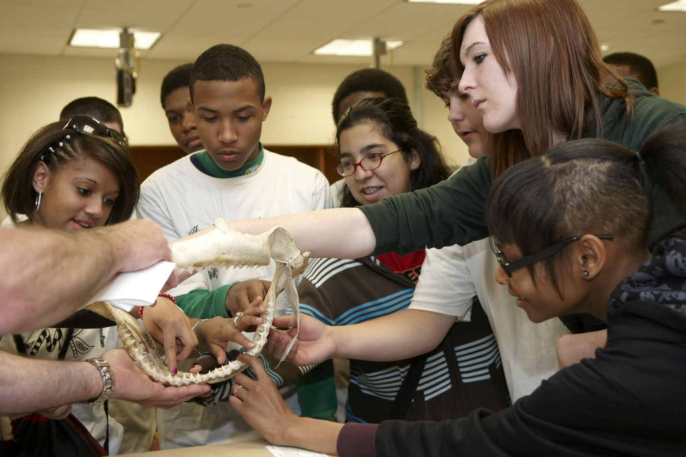 Student group on a behind-the-scenes tour gather around a skeletal jaw. Several reach out to touch the specimen; other students stand in the background.
