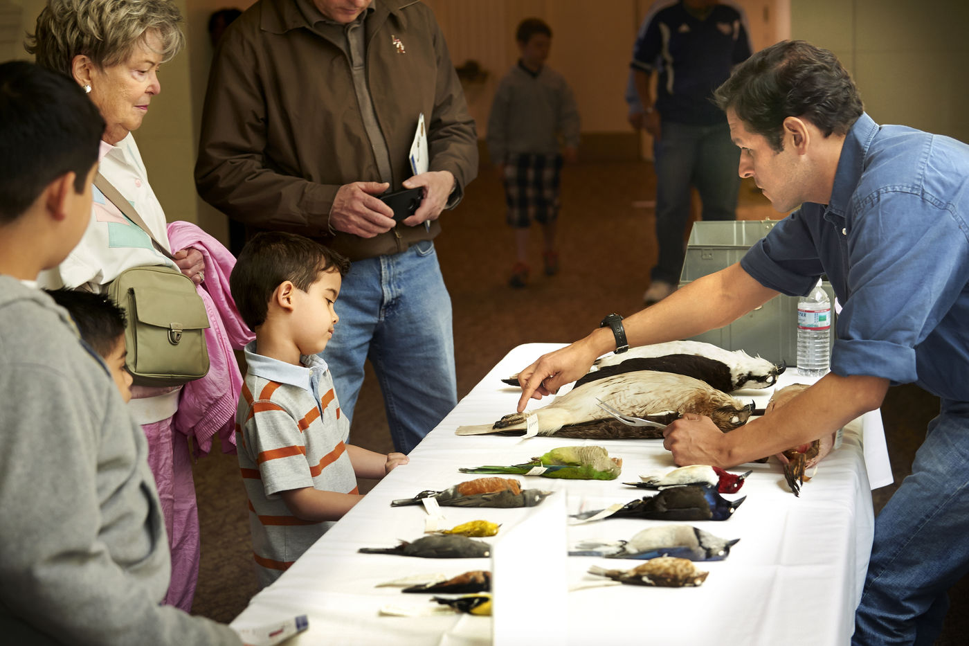 A Field Museum staff member shows bird specimens from the Museum's collection to a group of visitors.