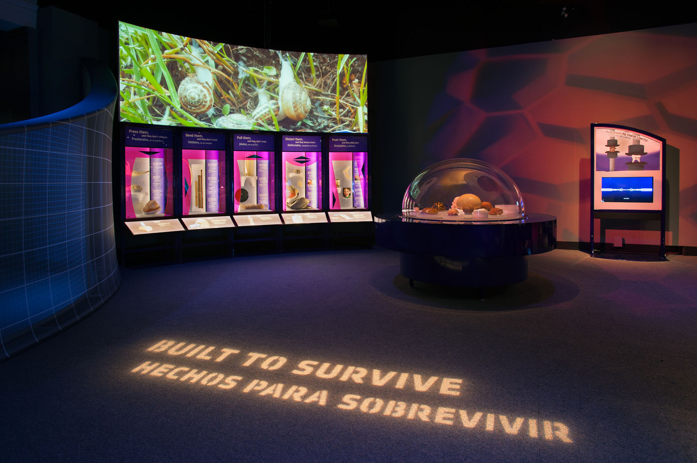 """View of the Machine Inside: Biomechanics exhibition, showing a case of shells, a wall projection of snails in grass, and the words """"Built to Survive"""" projected on the floor in the foreground."""