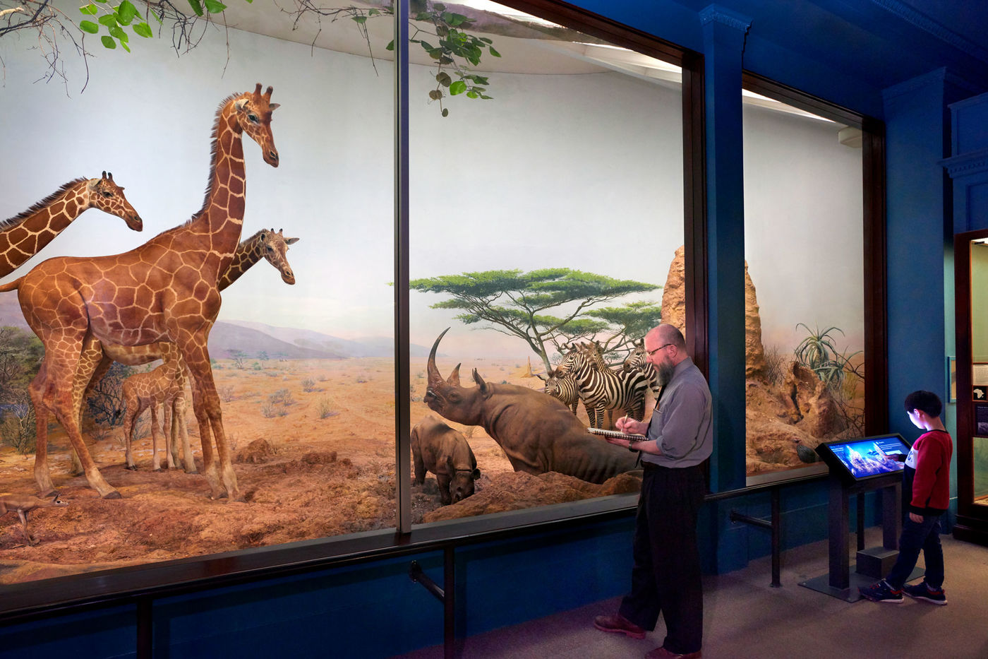 A man writes in a notebook as he stands in front of a large diorama with taxidermied giraffes, rhinos, and zebras in a savannah backdrop. To the right, a little boy interacts with a screen at a digital rail station.