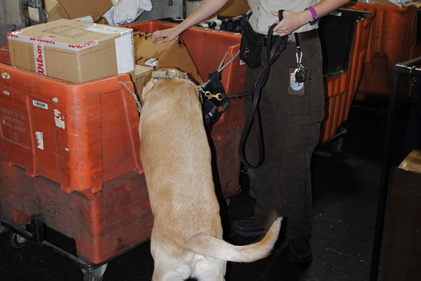 A woman in law enforcement uniform with a dog sniffing packages