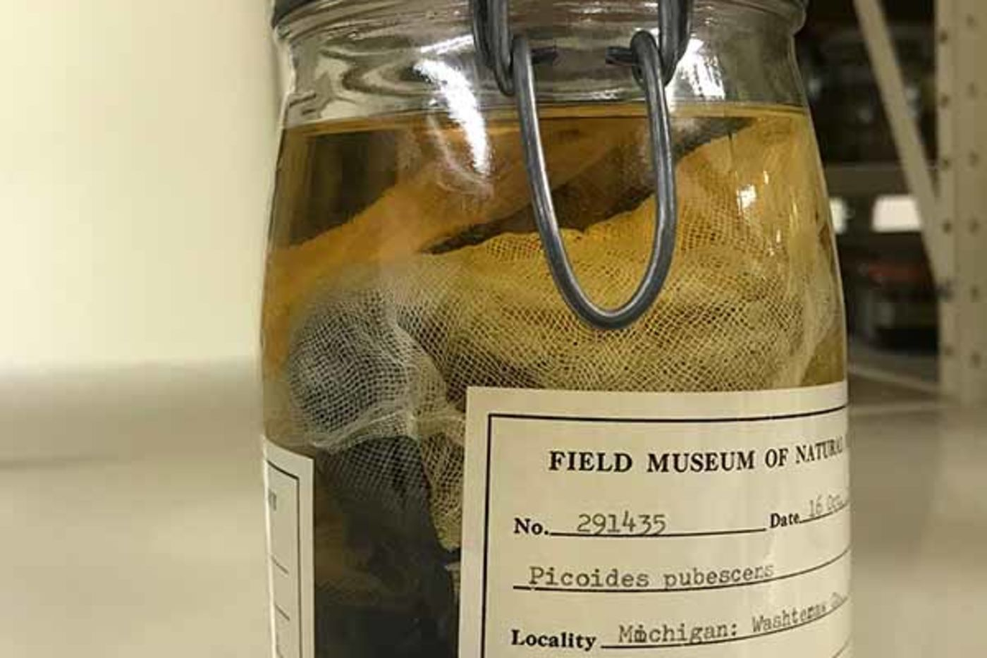 A large jar with a label containing a specimen in liquid
