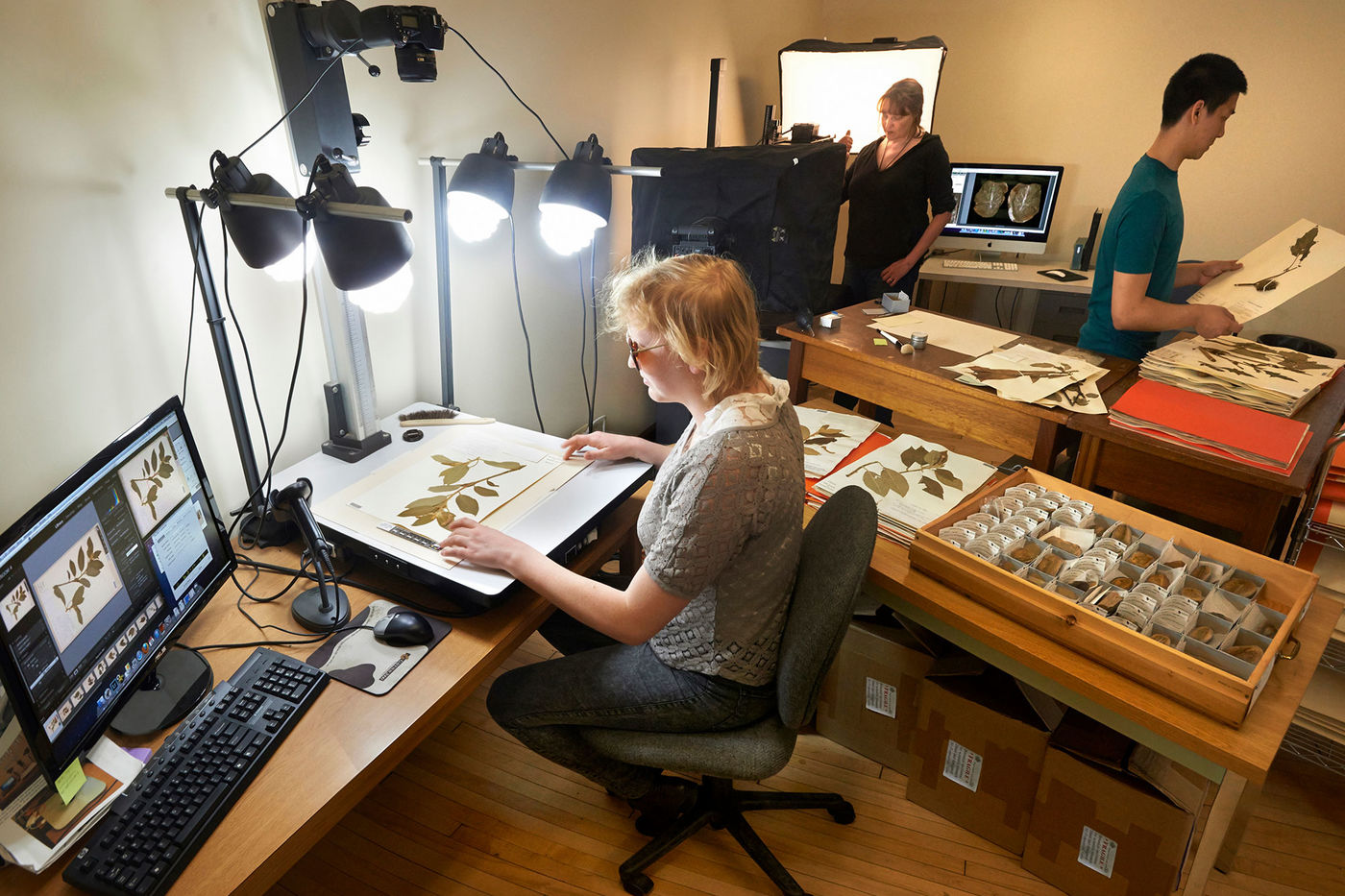 Three people work on digitizing herbarium specimens. The person in the front photographs a sheet with a plant specimen under bright lights, and the image appears on a computer monitor.