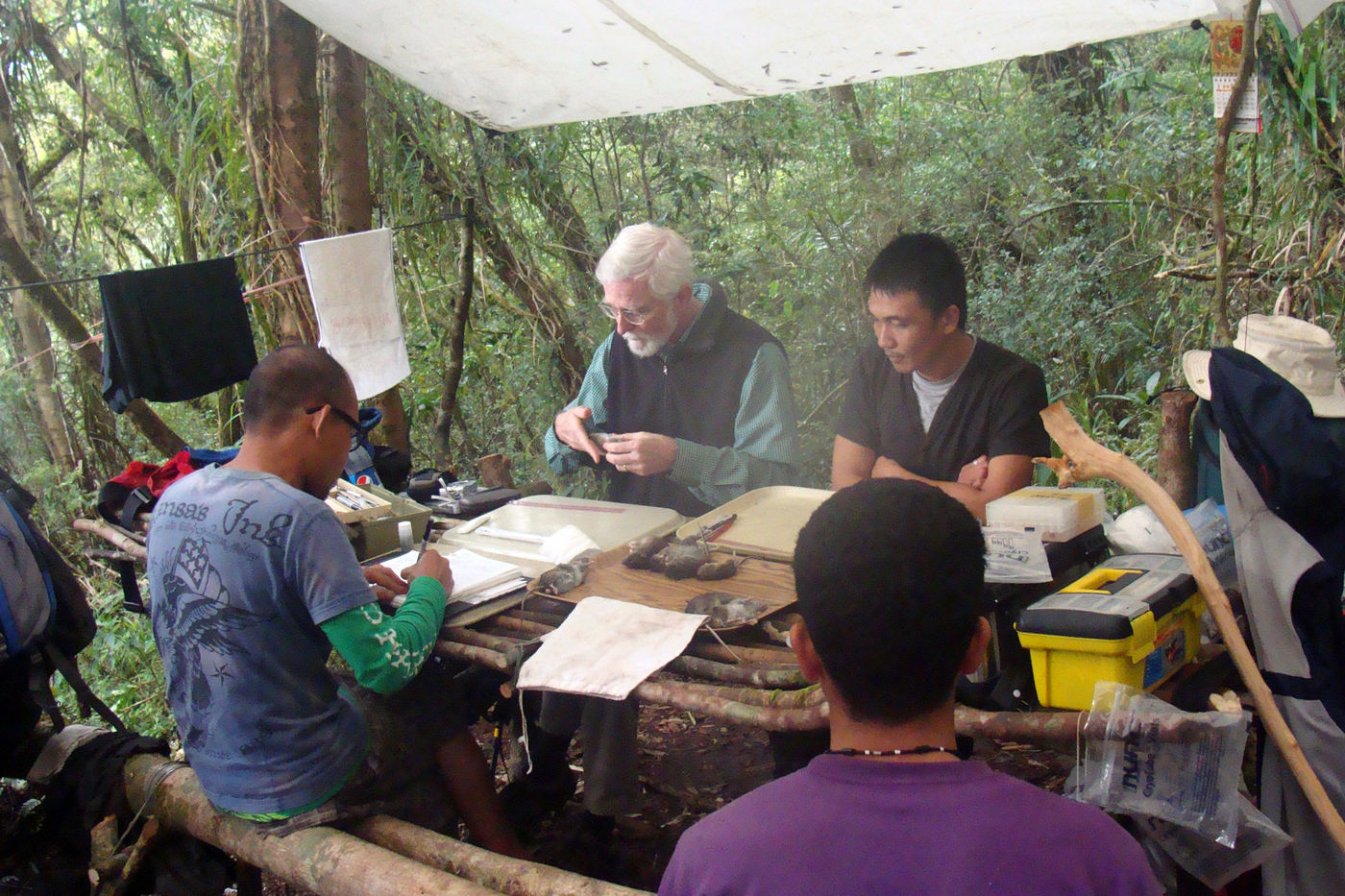 Four people sit around a table under a tarp in the middle of a forest. They work with small mammal specimens.