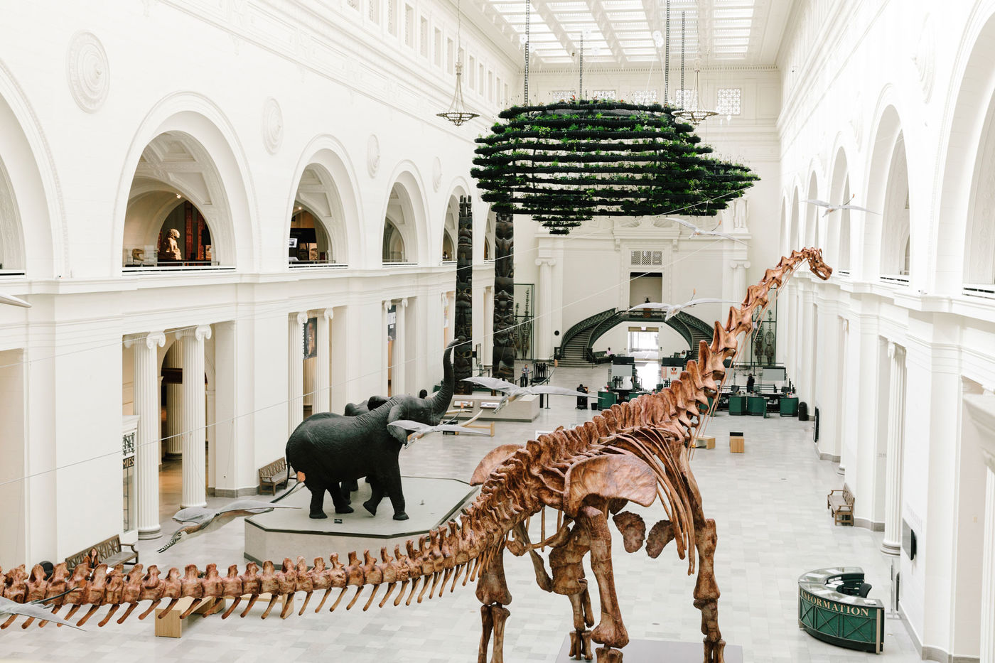 Wide view of Stanley Field Hall with Máximo the Titanosaur skeleton, two taxidermied elephants, and hanging gardens suspended from the ceiling.