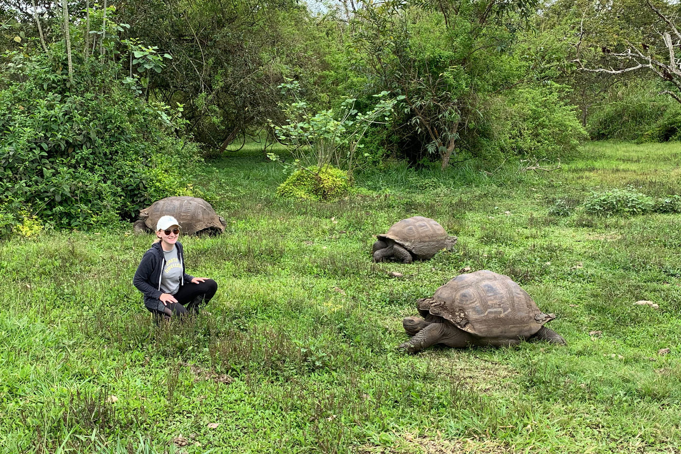 Molly Butler crouches in the grass near three Galapagos giant tortoises.