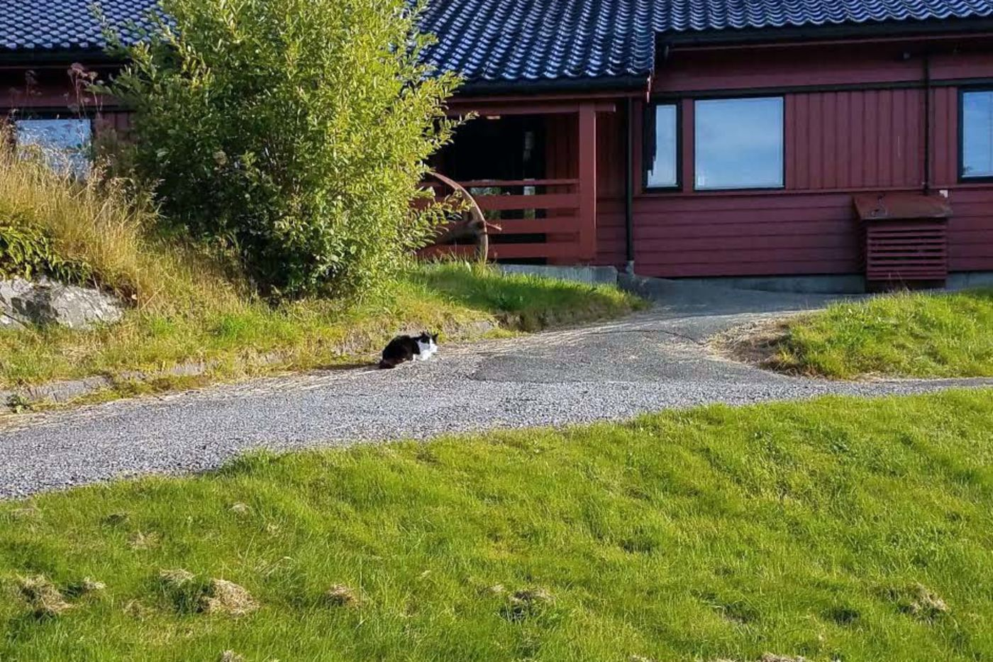 A black and white cat on a grassy hill in front of a red house