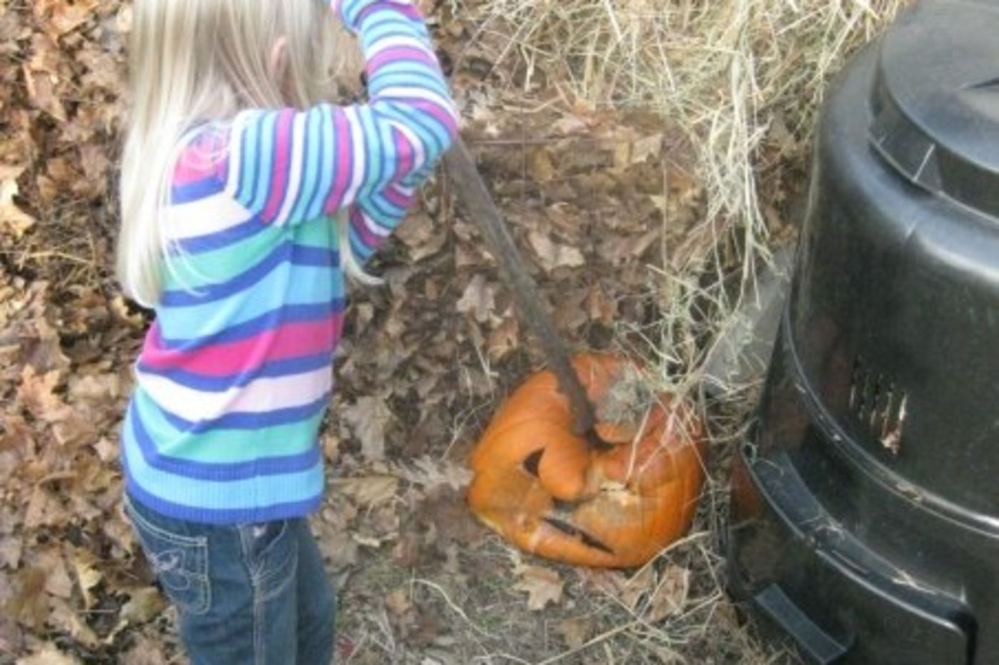 A girl uses a long stick to push an old Halloween pumpkin into a compost pile